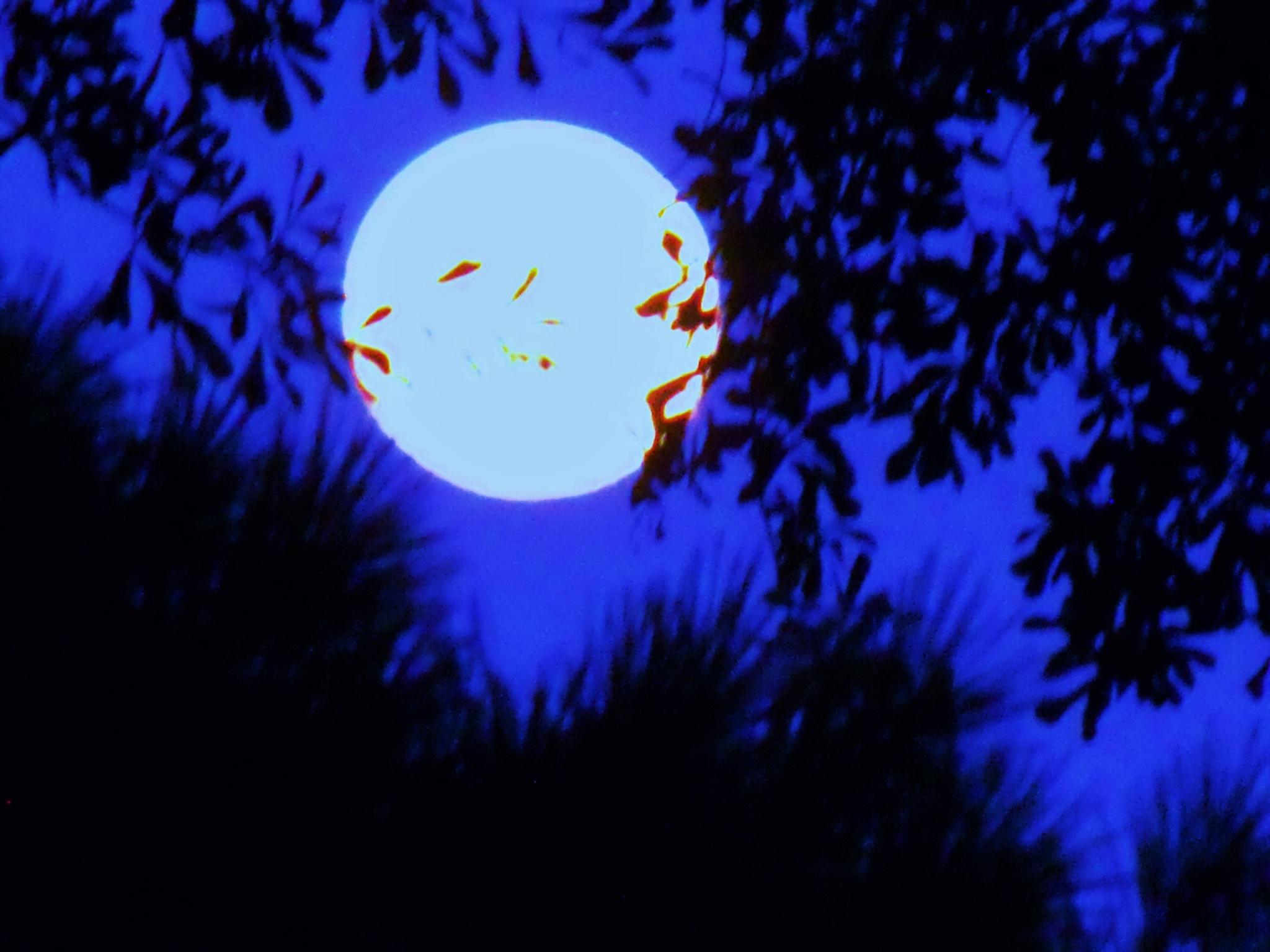 blue moon by cindi.lucas.7
