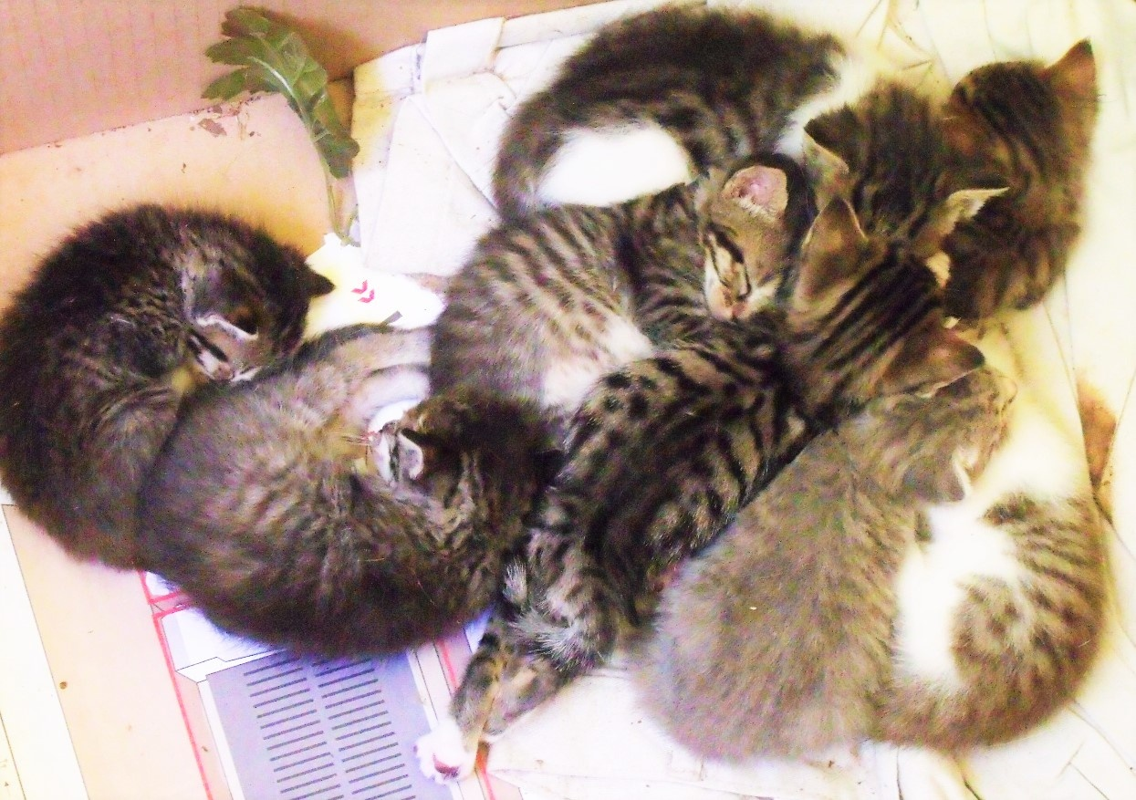 a wad of kittens by cindi.lucas.7