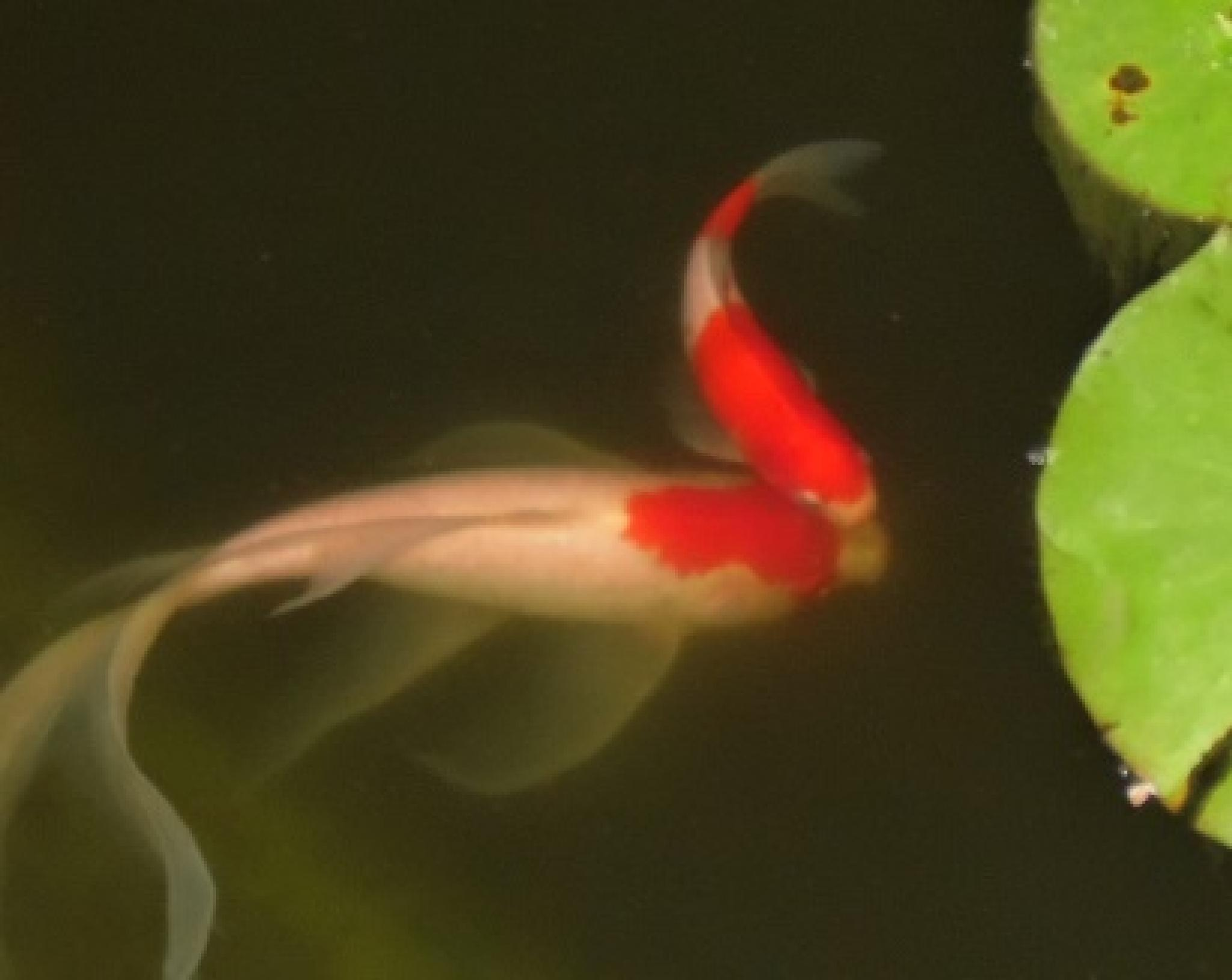 fishy kiss by cindi.lucas.7