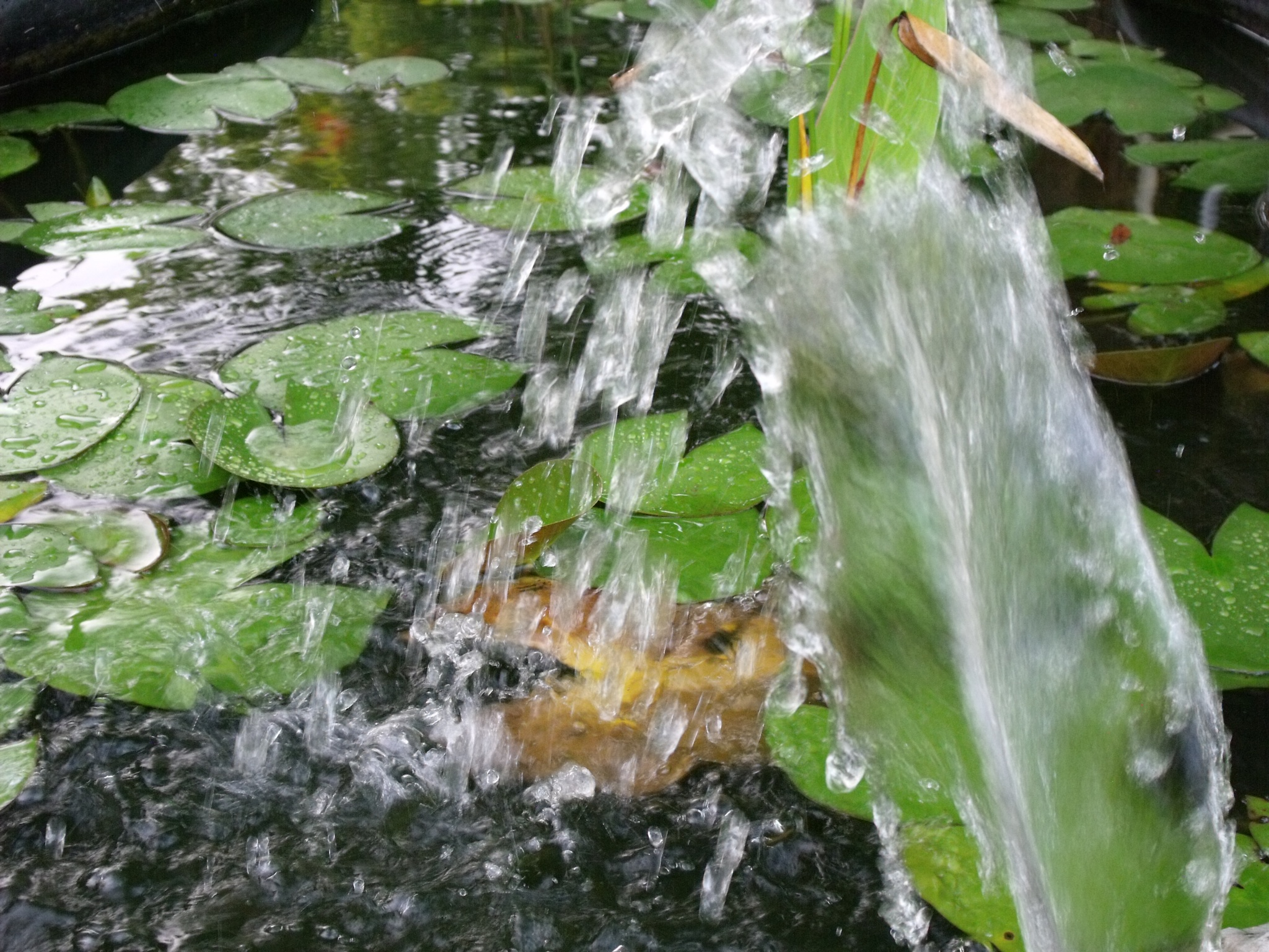 waterworks by cindi.lucas.7