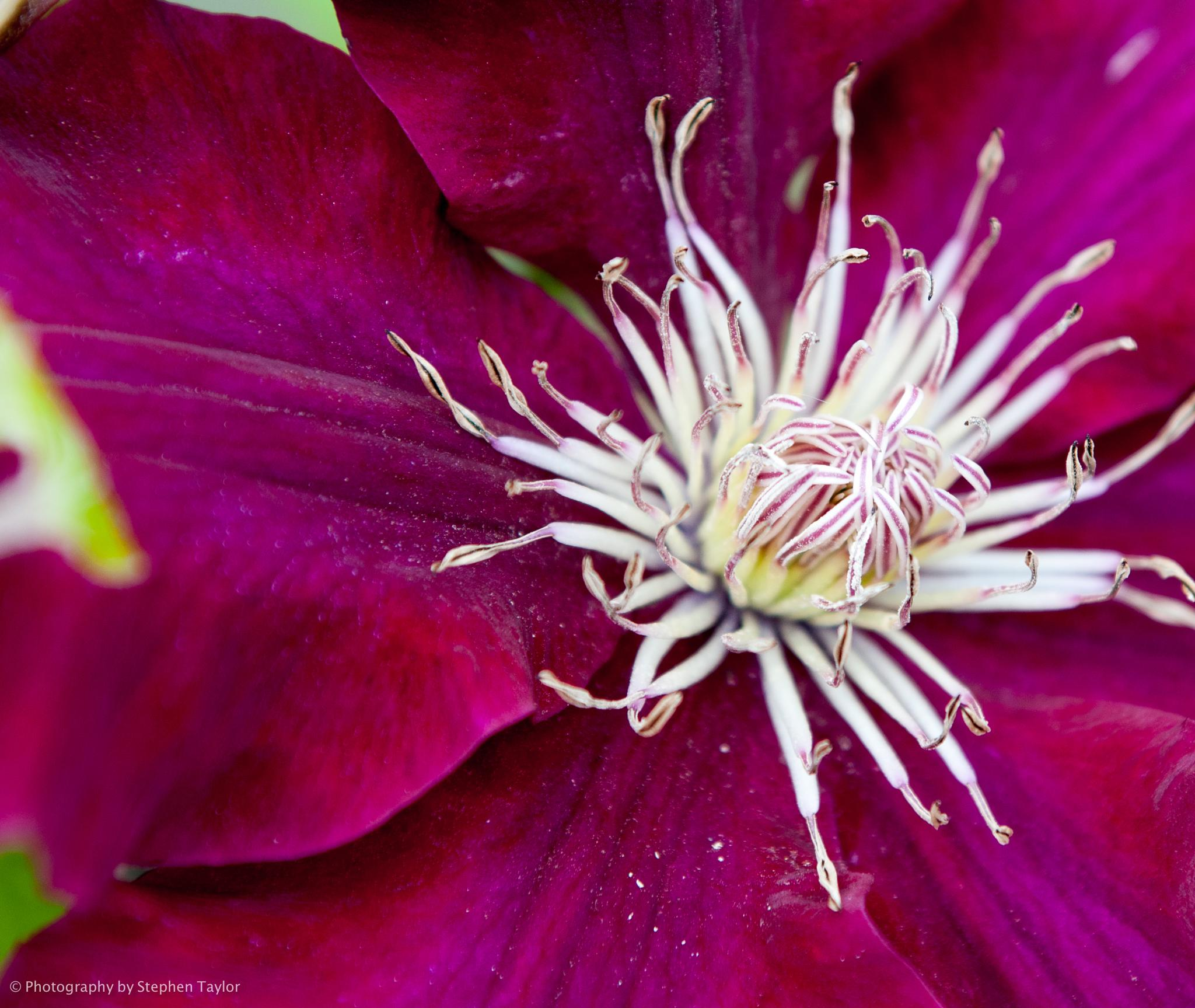 Macro flower by Stephen Taylor