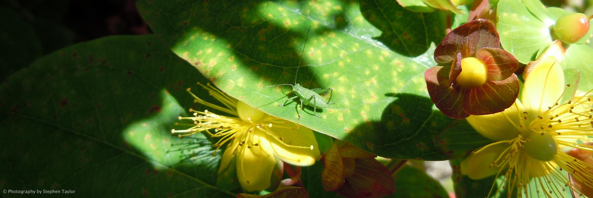 Bug in the sun by Stephen Taylor