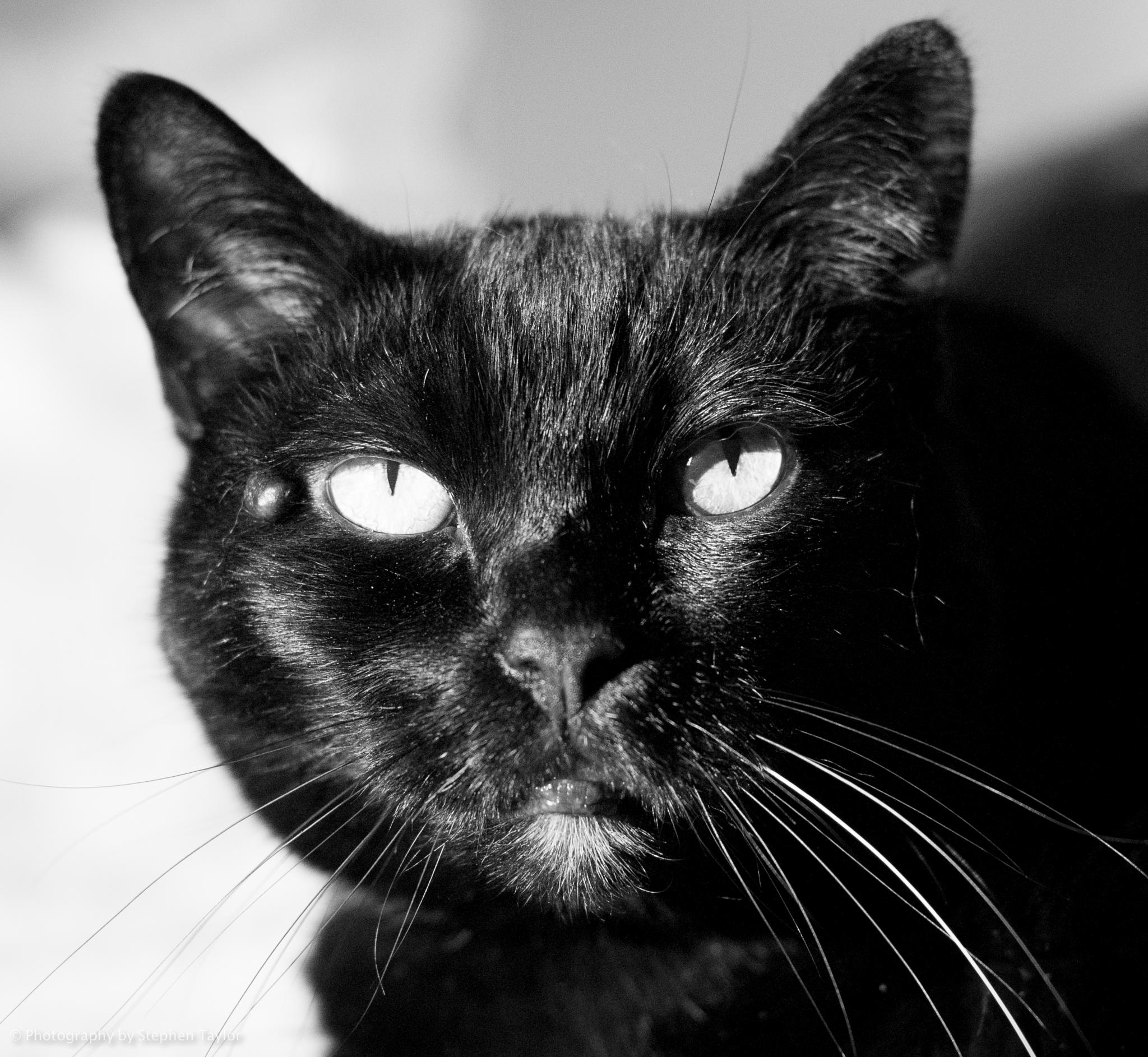 Black cat! by Stephen Taylor