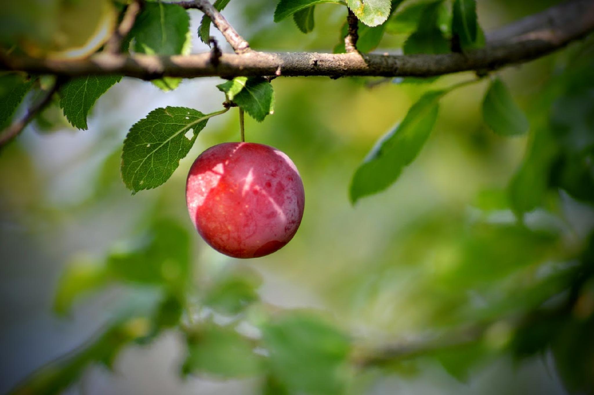 fruit by samu