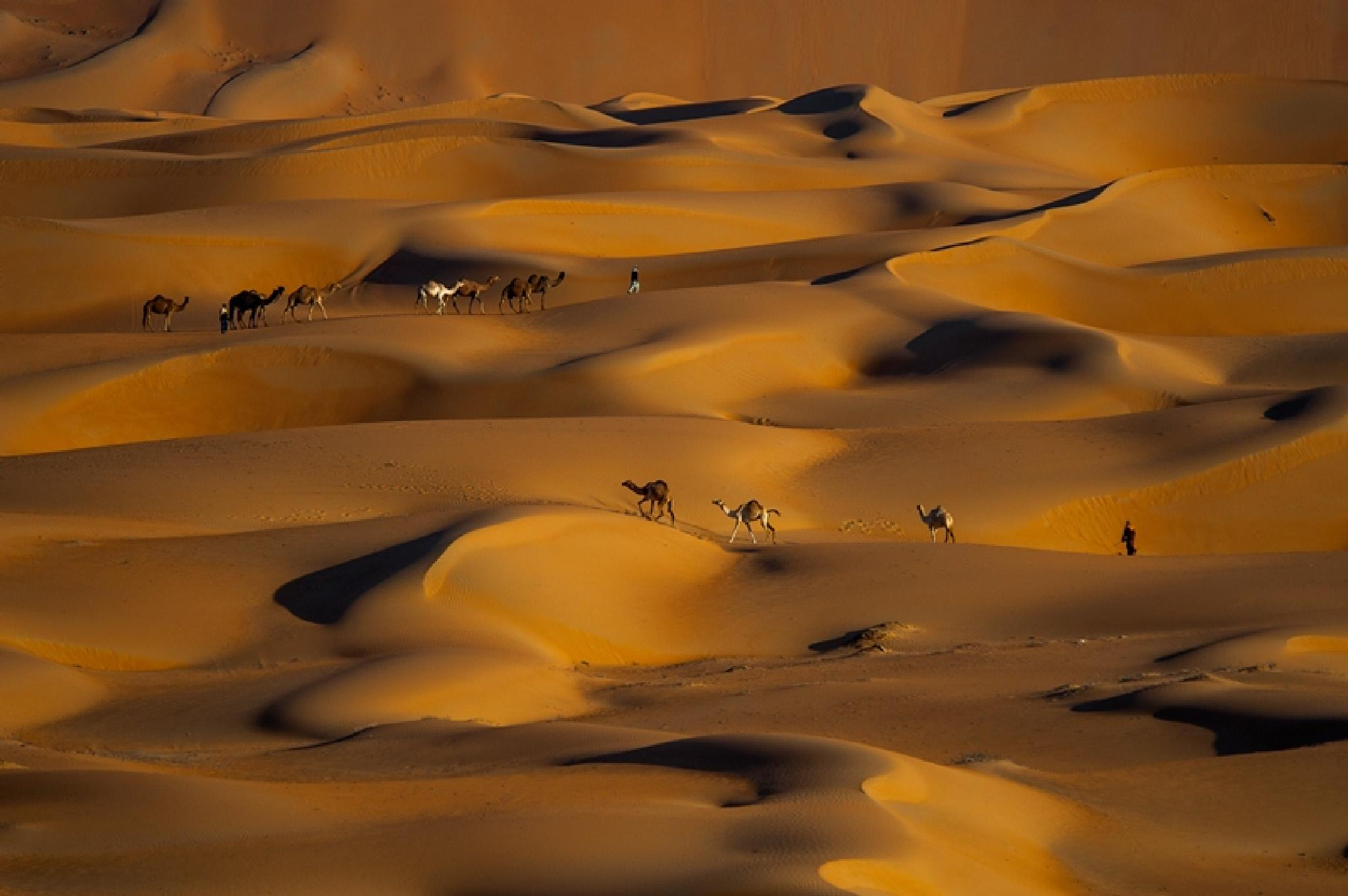 The desert nice language beloved photographer by adeeb alani