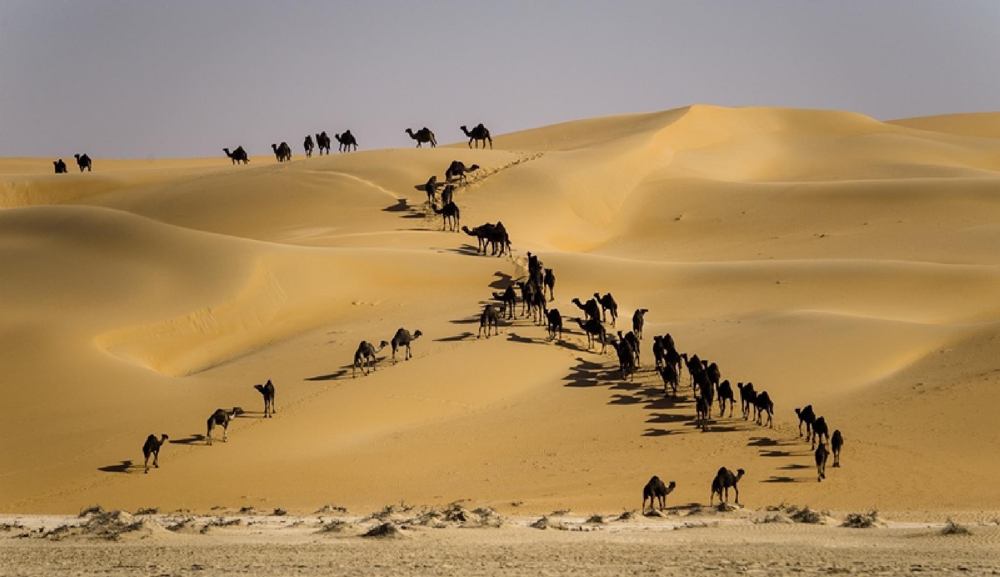 Everyone in one direction by adeeb alani
