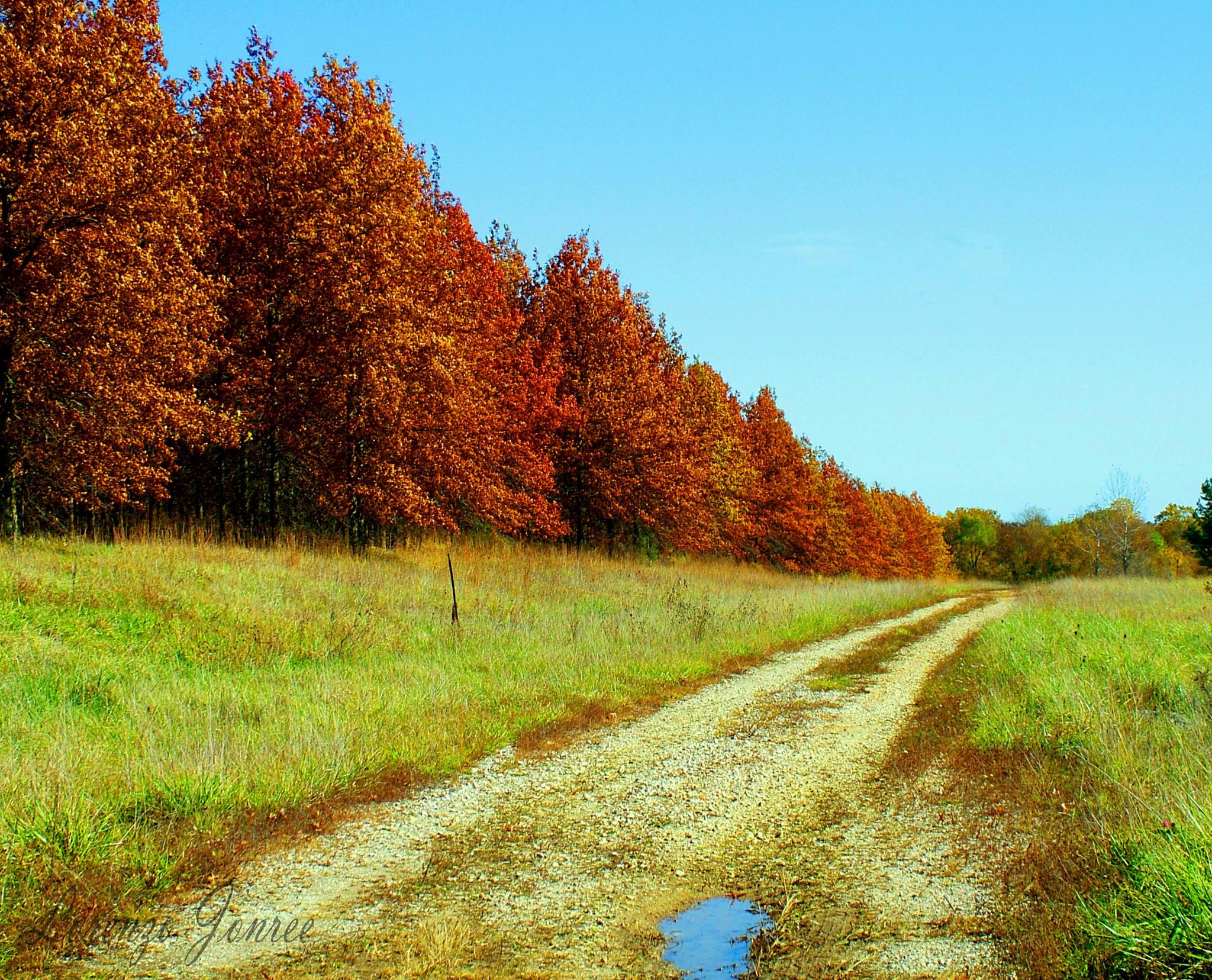 Missouri Autumn Country Drive  by Lorenzo (Larry) Jonree