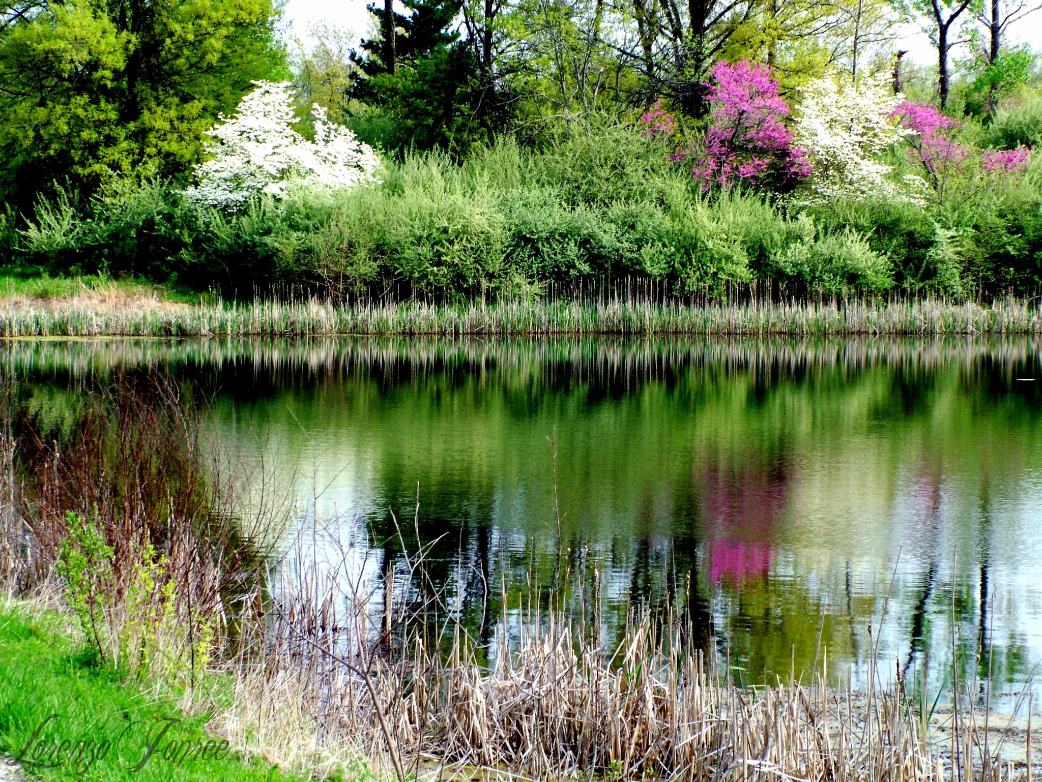 Sleepy Hollow Pond in Spring  1 0f 3 by Lorenzo (Larry) Jonree