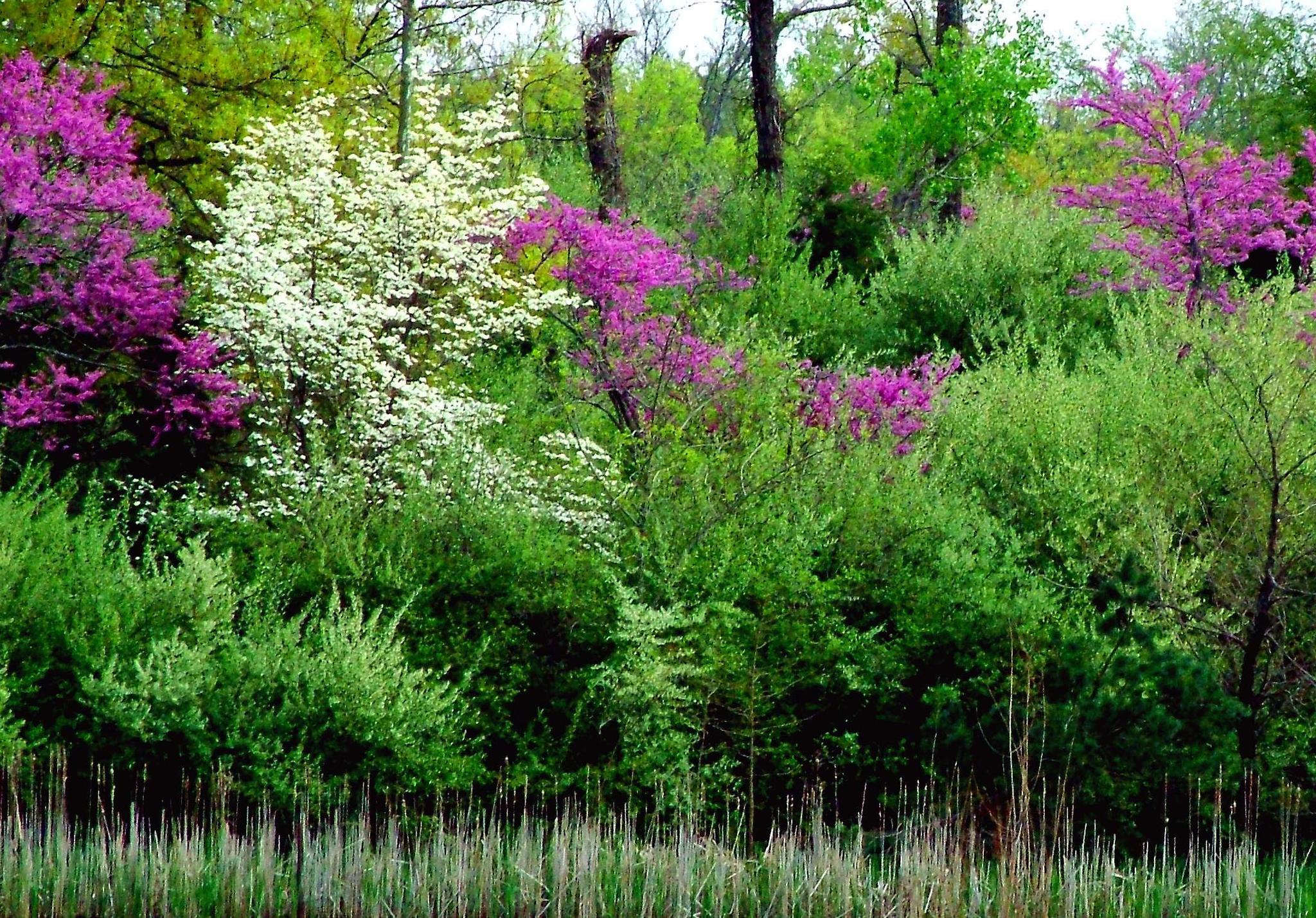 Springtime At Sleepy Hollow Pond 3 0f 3  Close Up by Lorenzo (Larry) Jonree