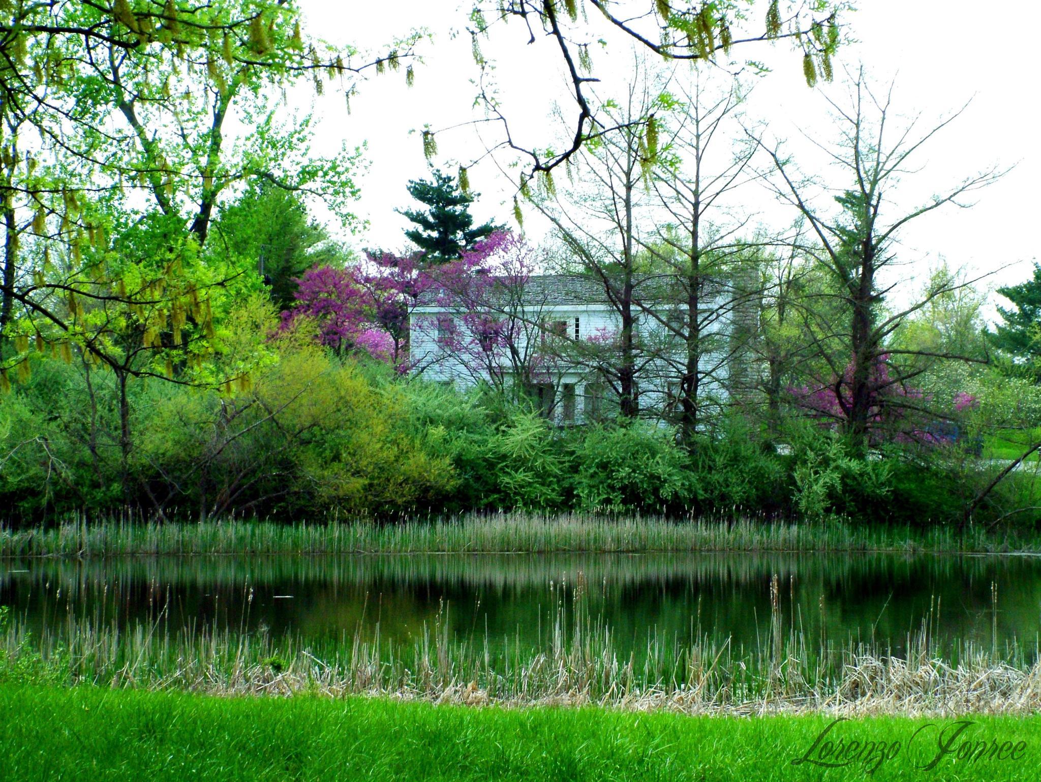 Across The Pond      1 of 2  by Lorenzo (Larry) Jonree