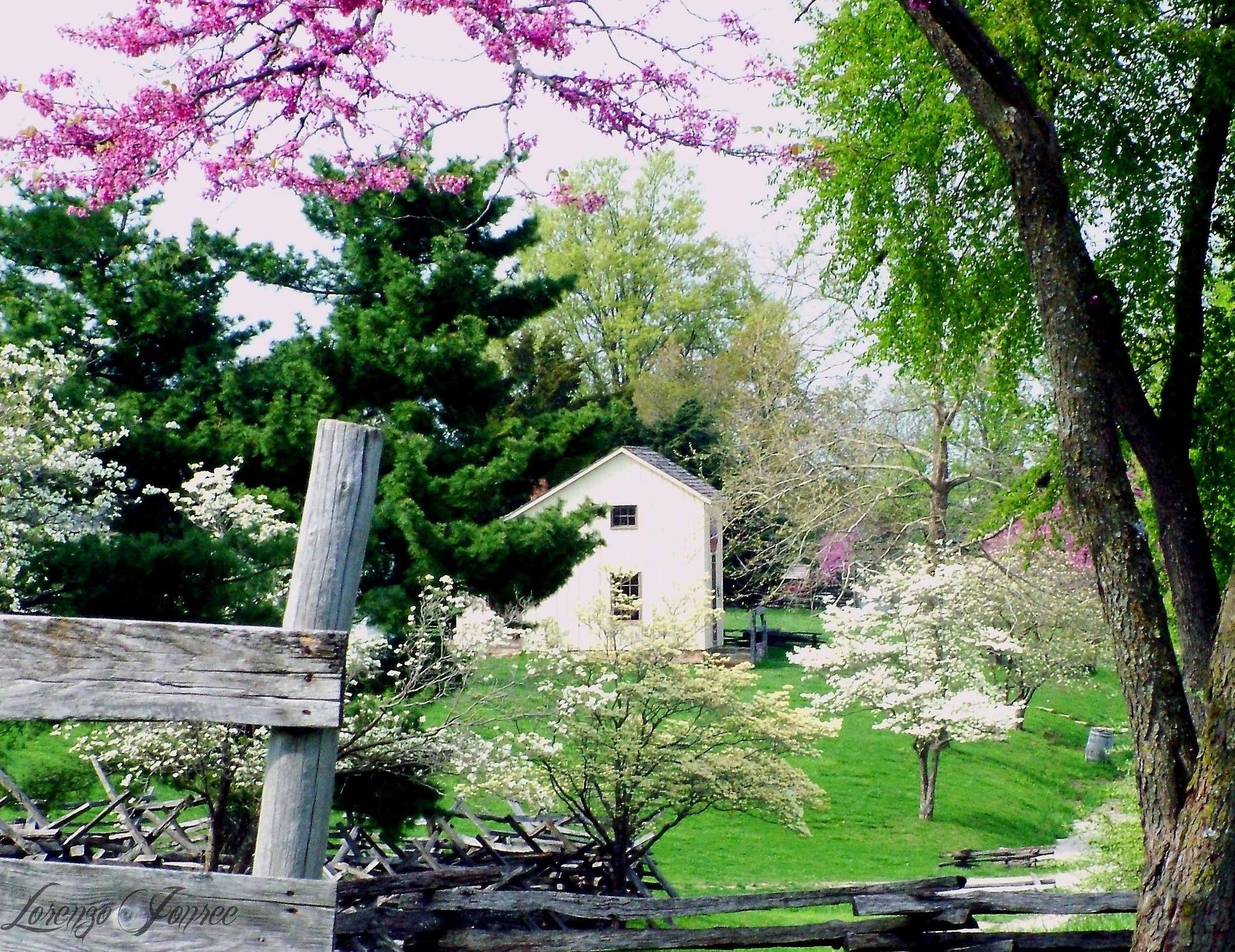 Rural Missouri In Spring  4 of 4  by Lorenzo (Larry) Jonree