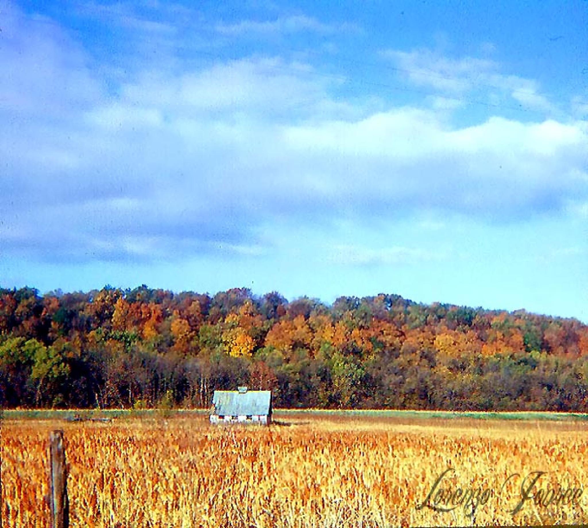 Rural Missouri In Autumn  by Lorenzo (Larry) Jonree