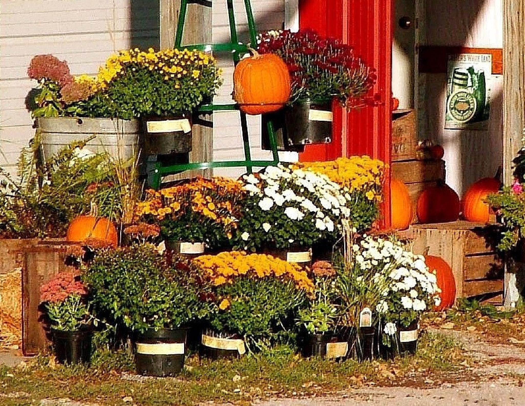 Country Autumn  by Lorenzo (Larry) Jonree