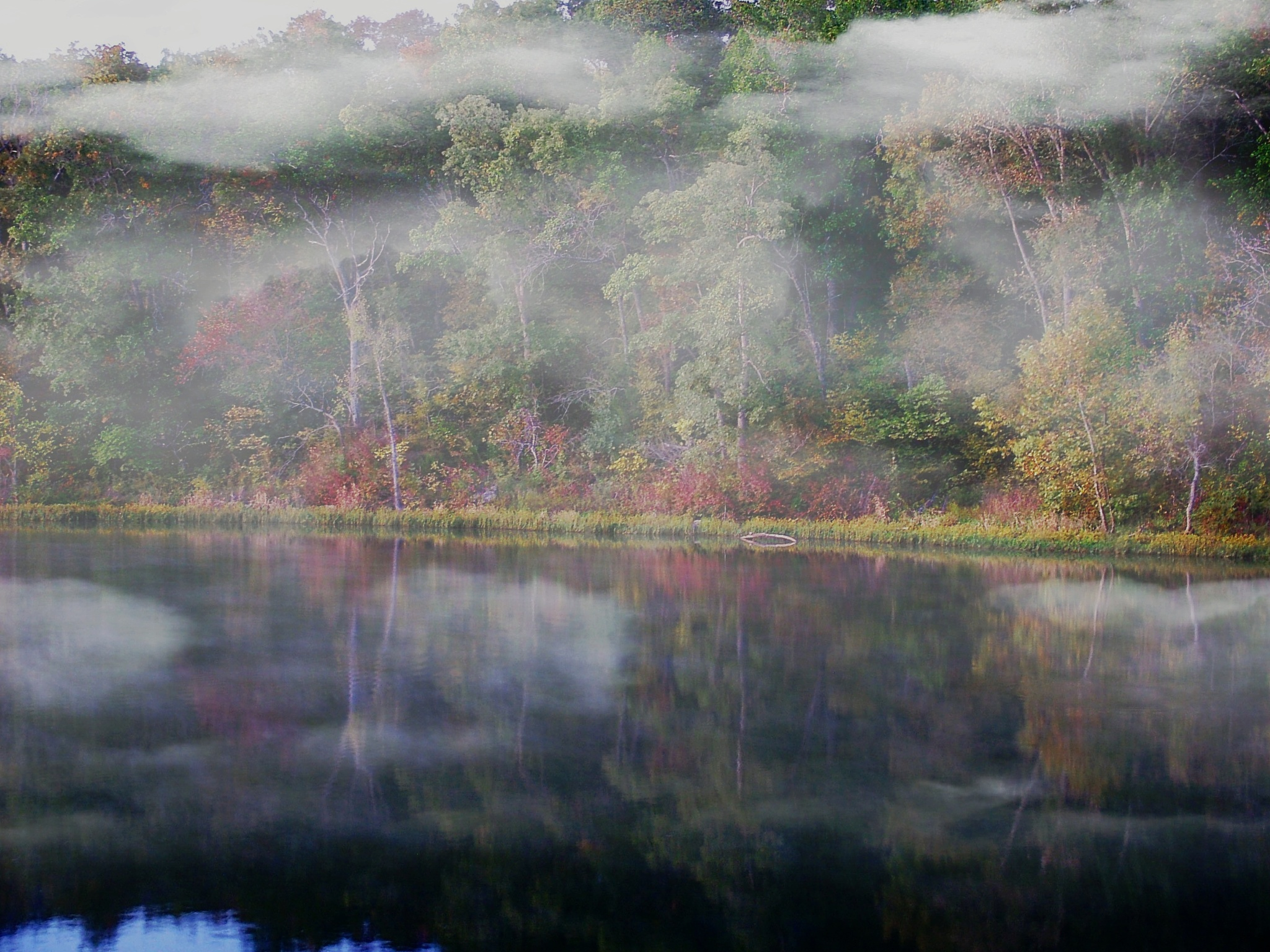 Early Morning Fog  by Lorenzo (Larry) Jonree