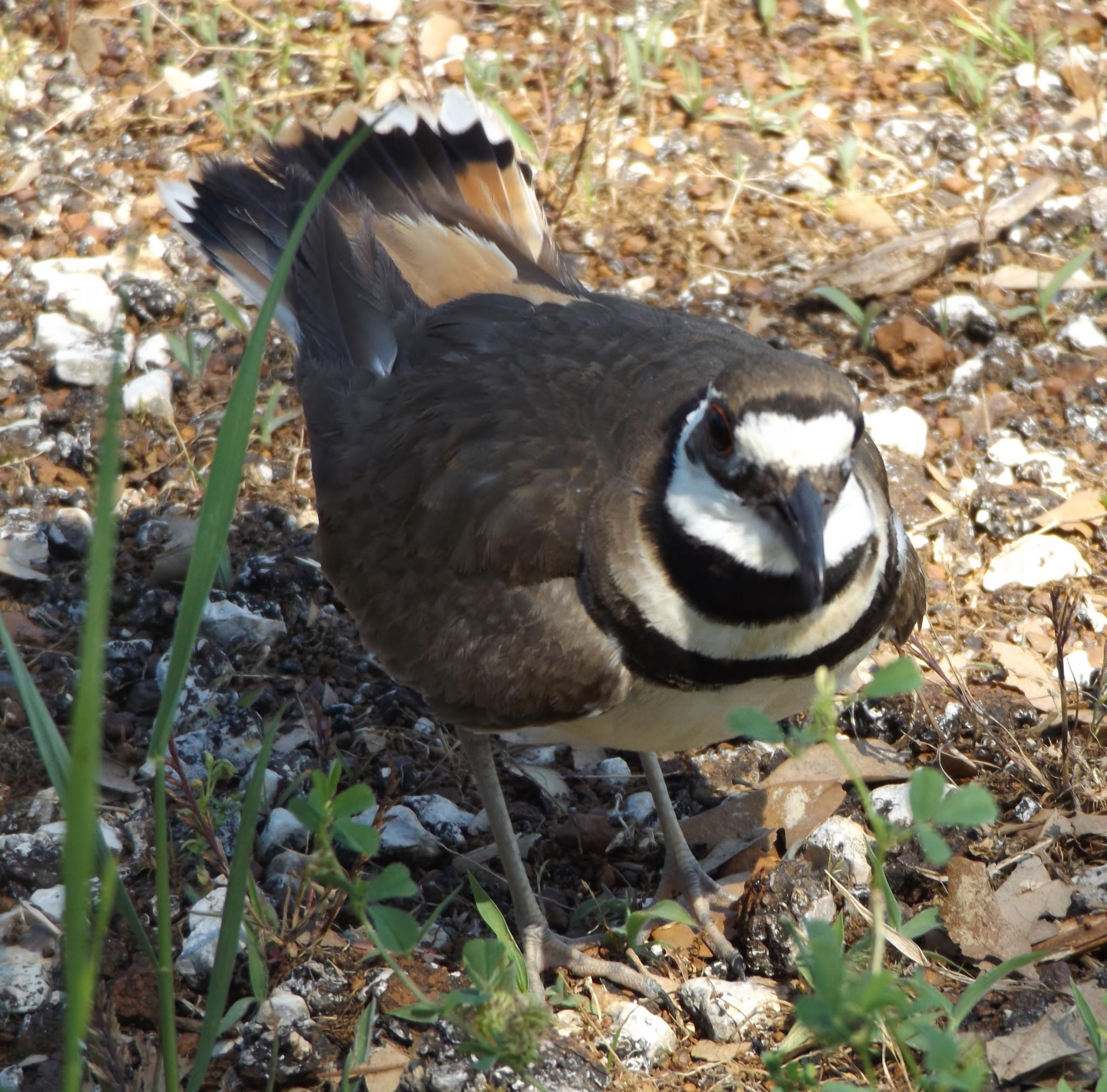 Protecting  Eggs by sherrie.lowery