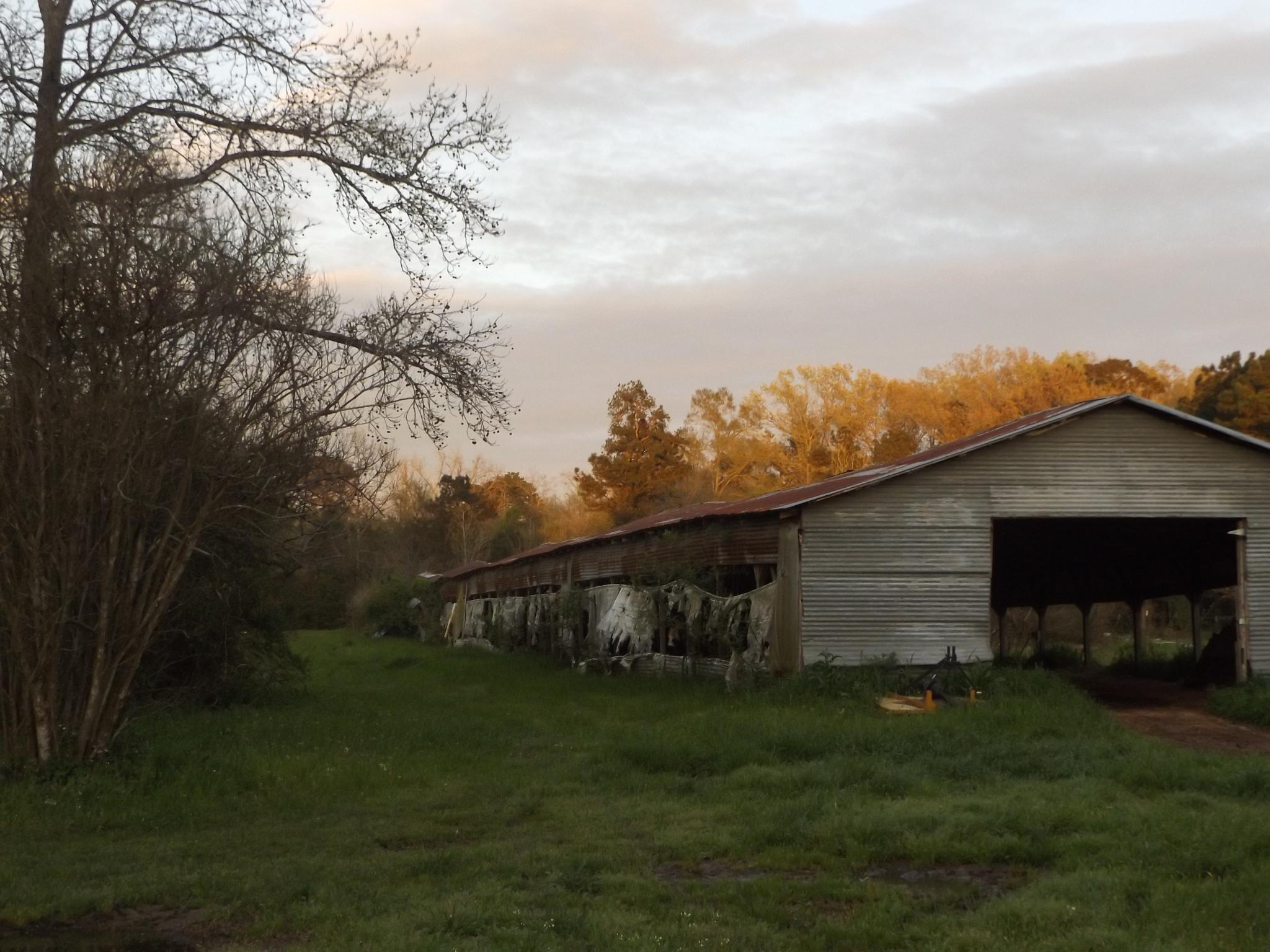 Old Chicken Shed  by sherrie.lowery