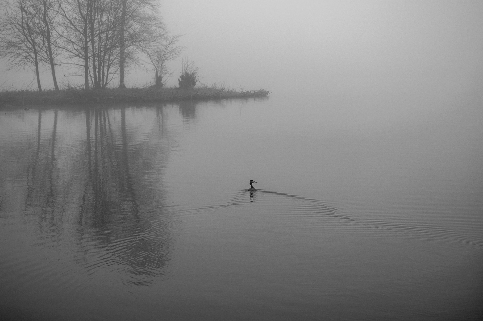Fog by Hans Hoogers