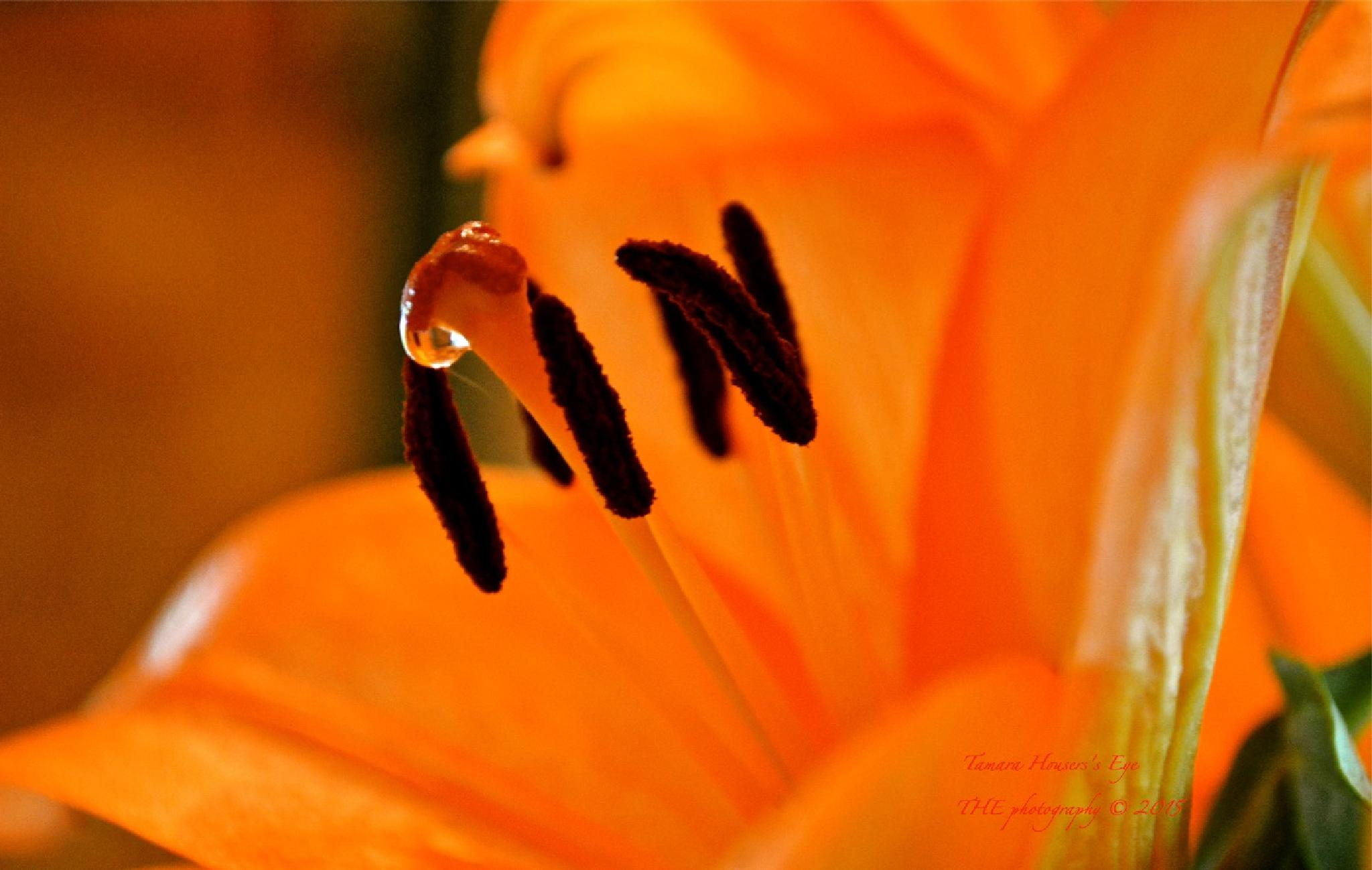 Drop of orange by Tamara Housers Eye