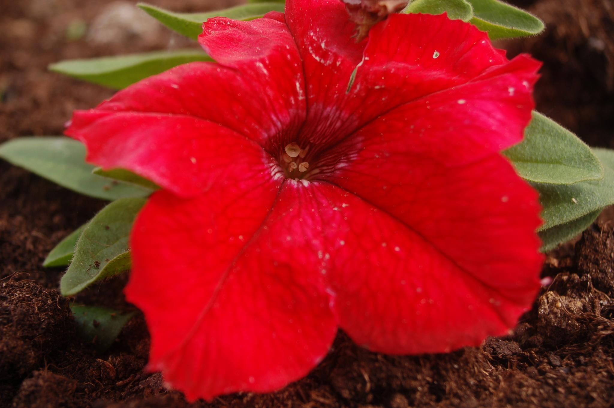 red by iwan