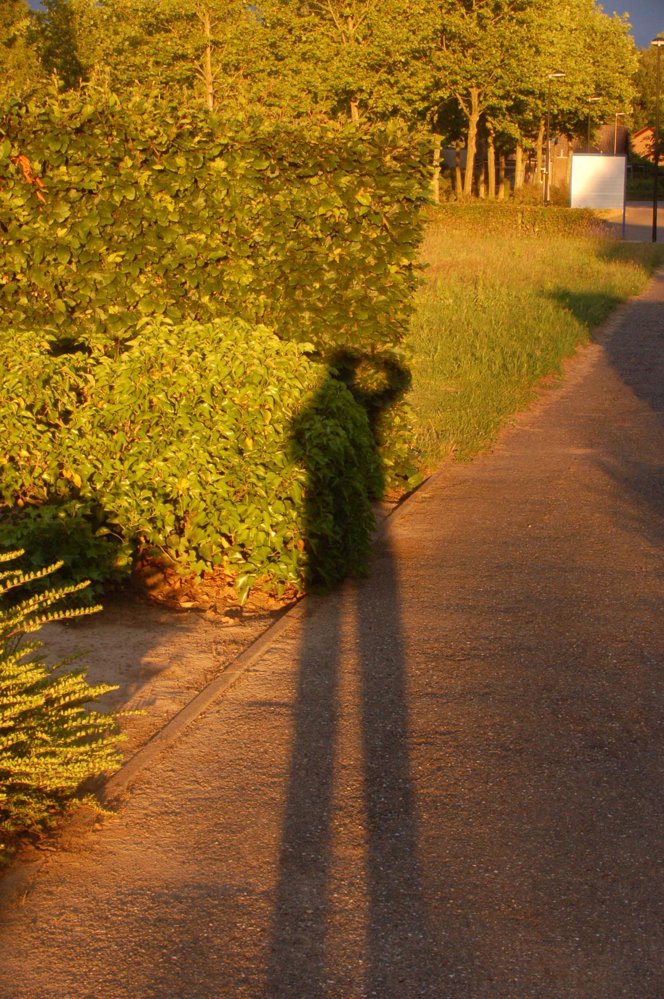 it's my shadow by iwan