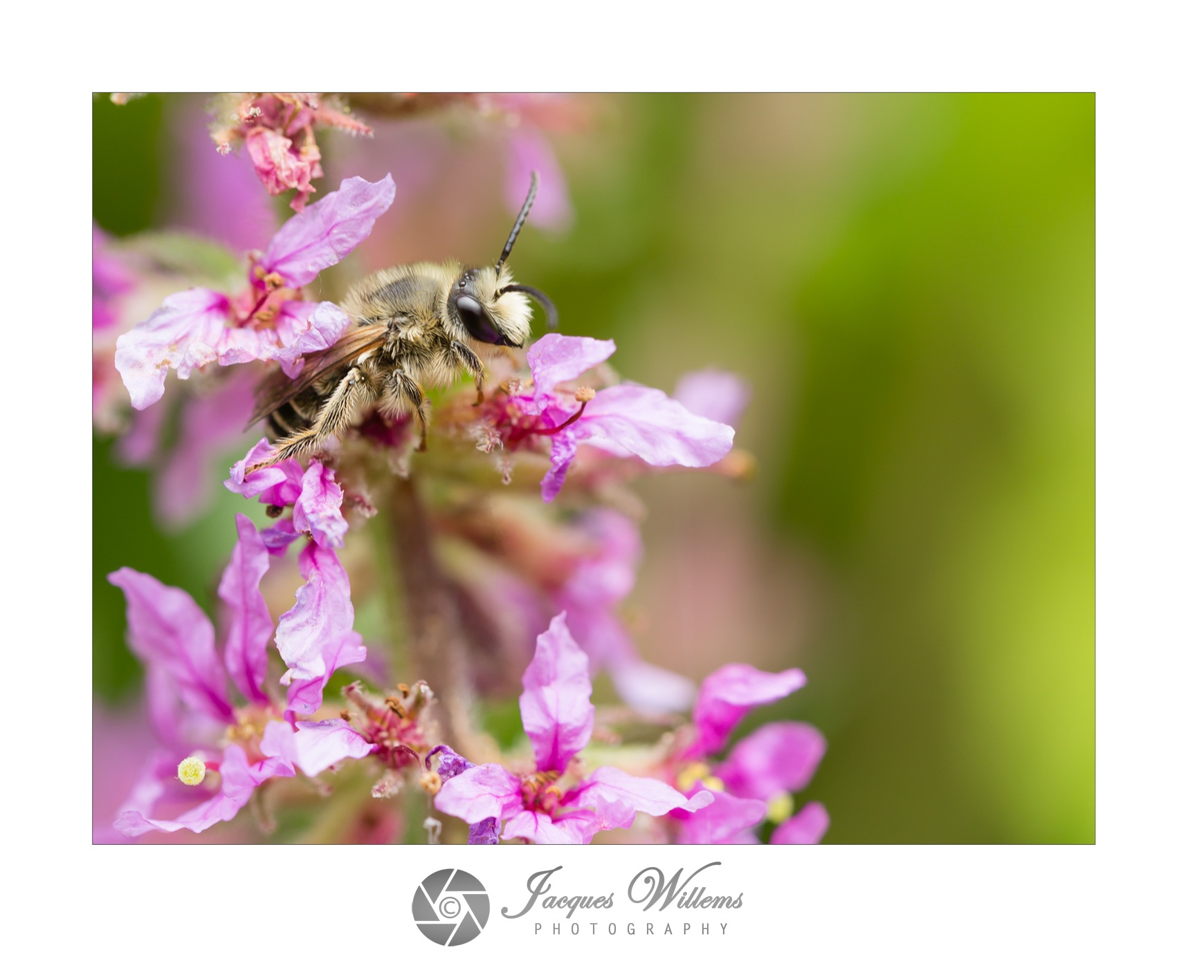 Beehave by Jumpingjacquesflash