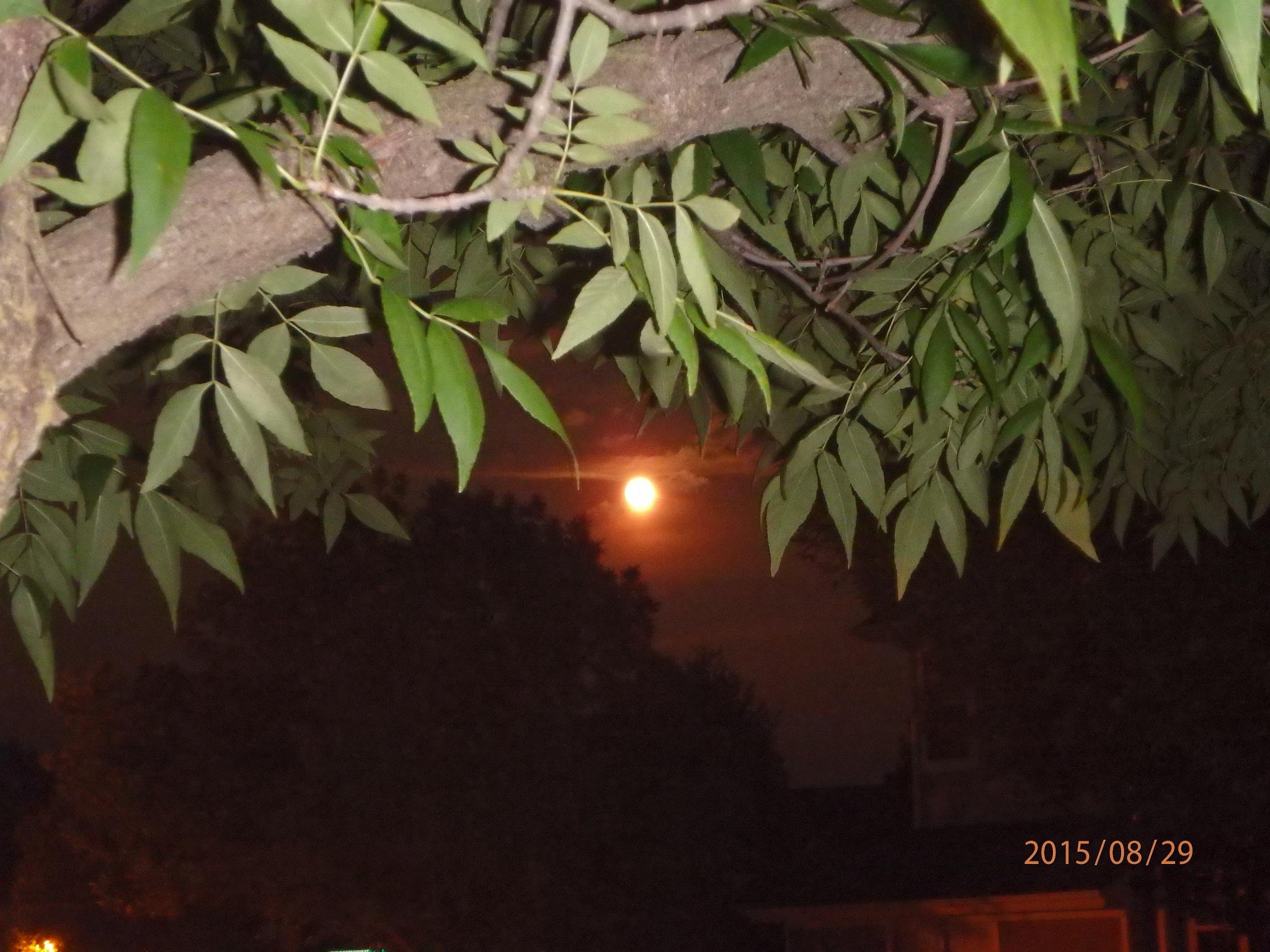 Orange Super Moon by patriciaann3139