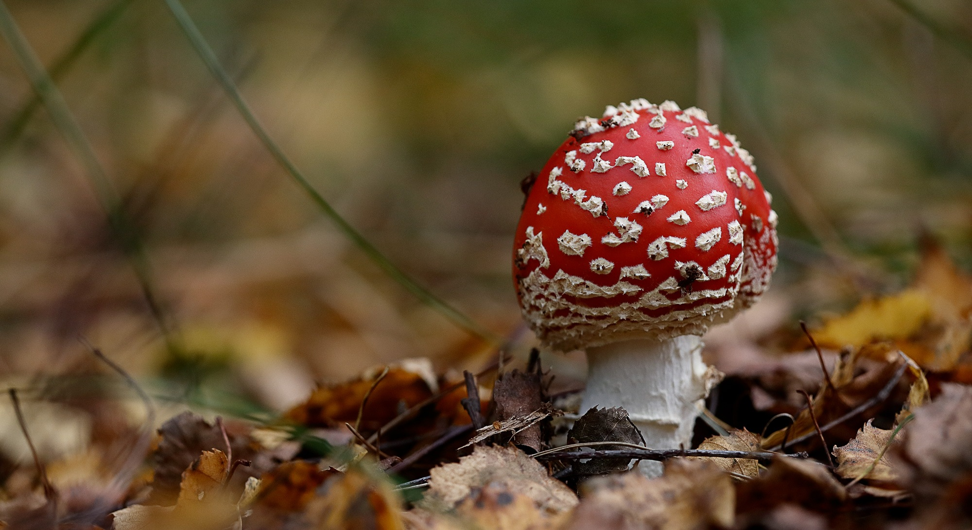 Fly agaric Mushroom by John Erwood