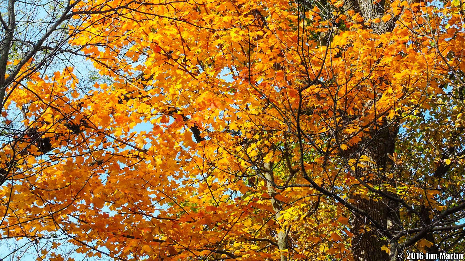 Plenty of Orange by Jim Martin