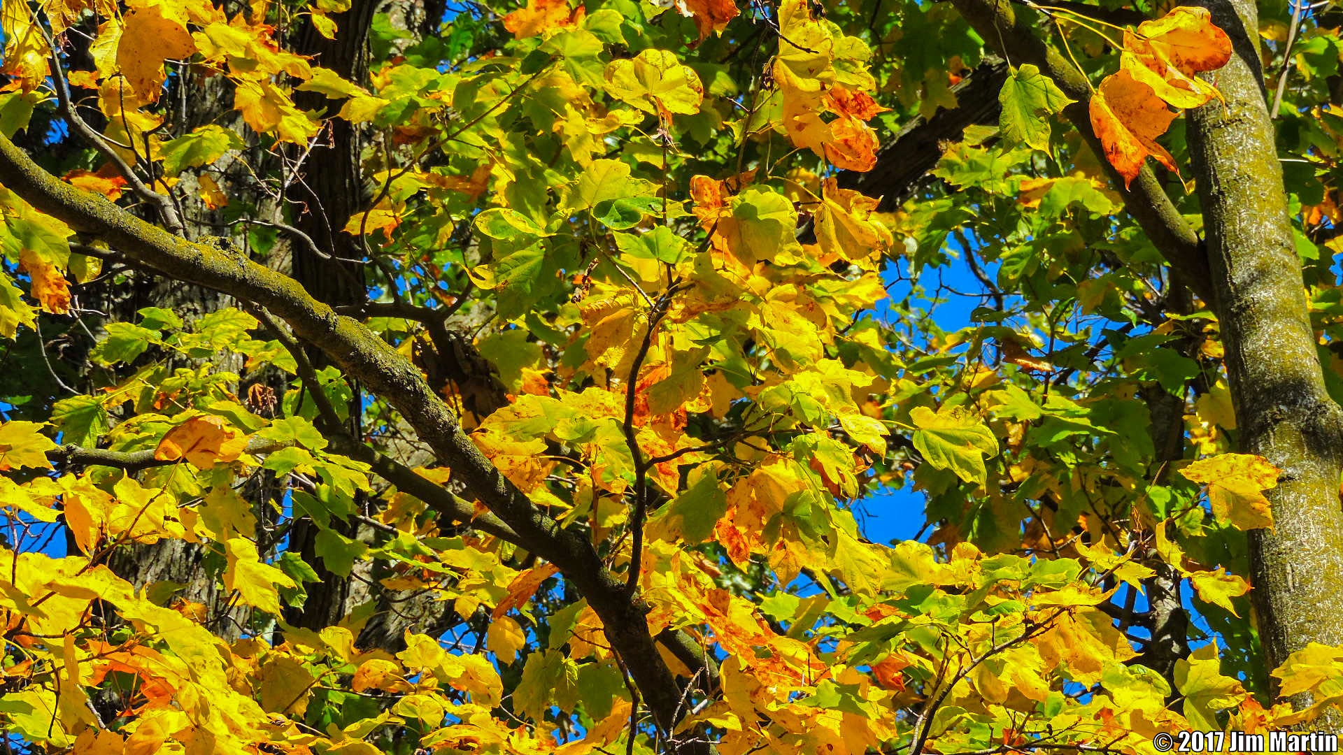 Fall Colors 5 by Jim Martin