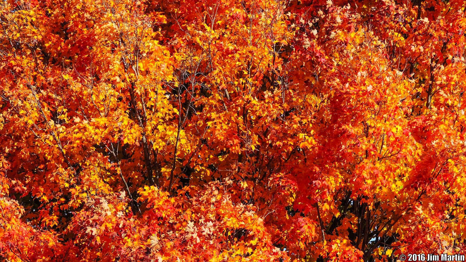 Vibrant Colors by Jim Martin