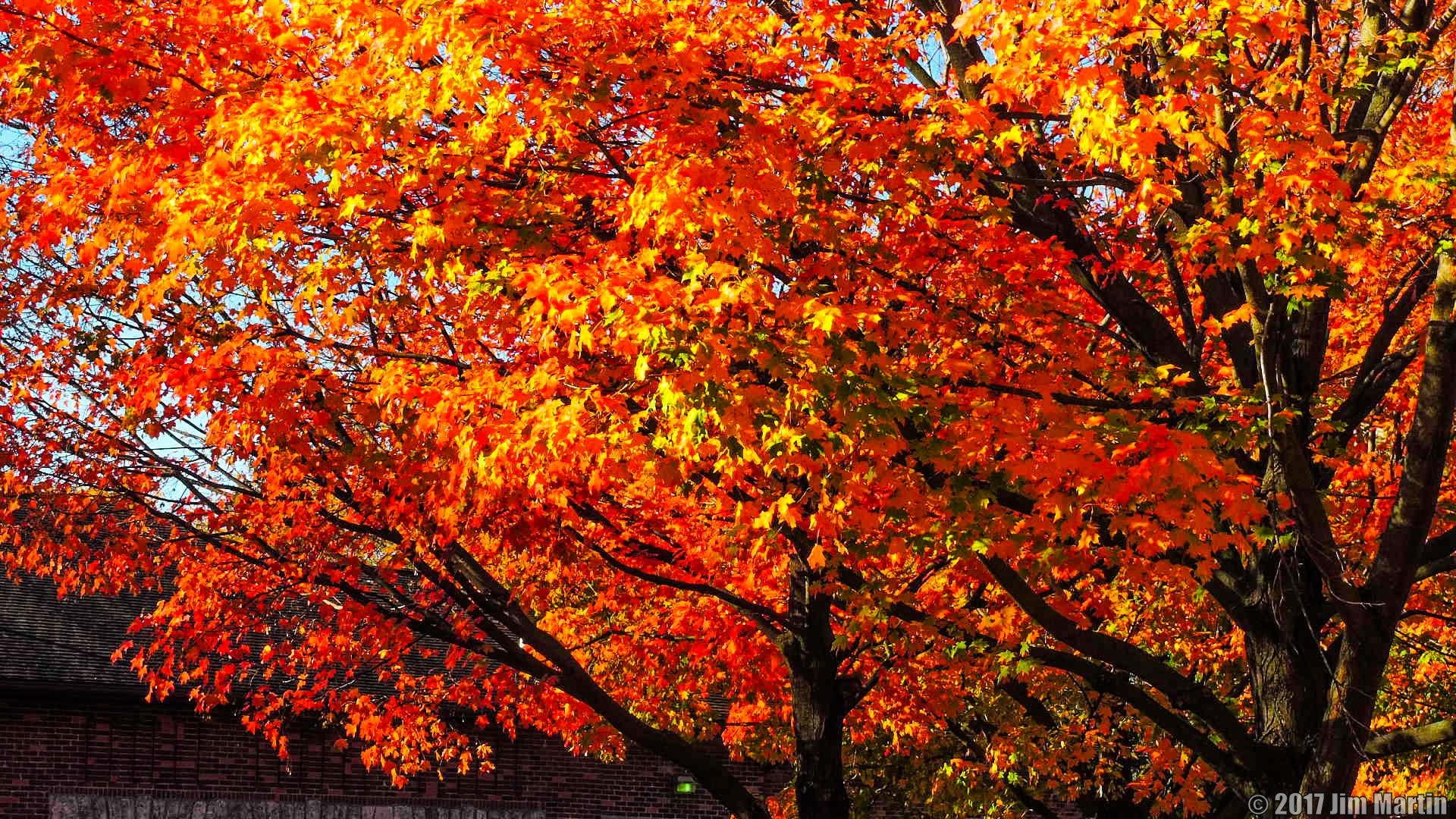 Fantastic Fall Color 4 by Jim Martin