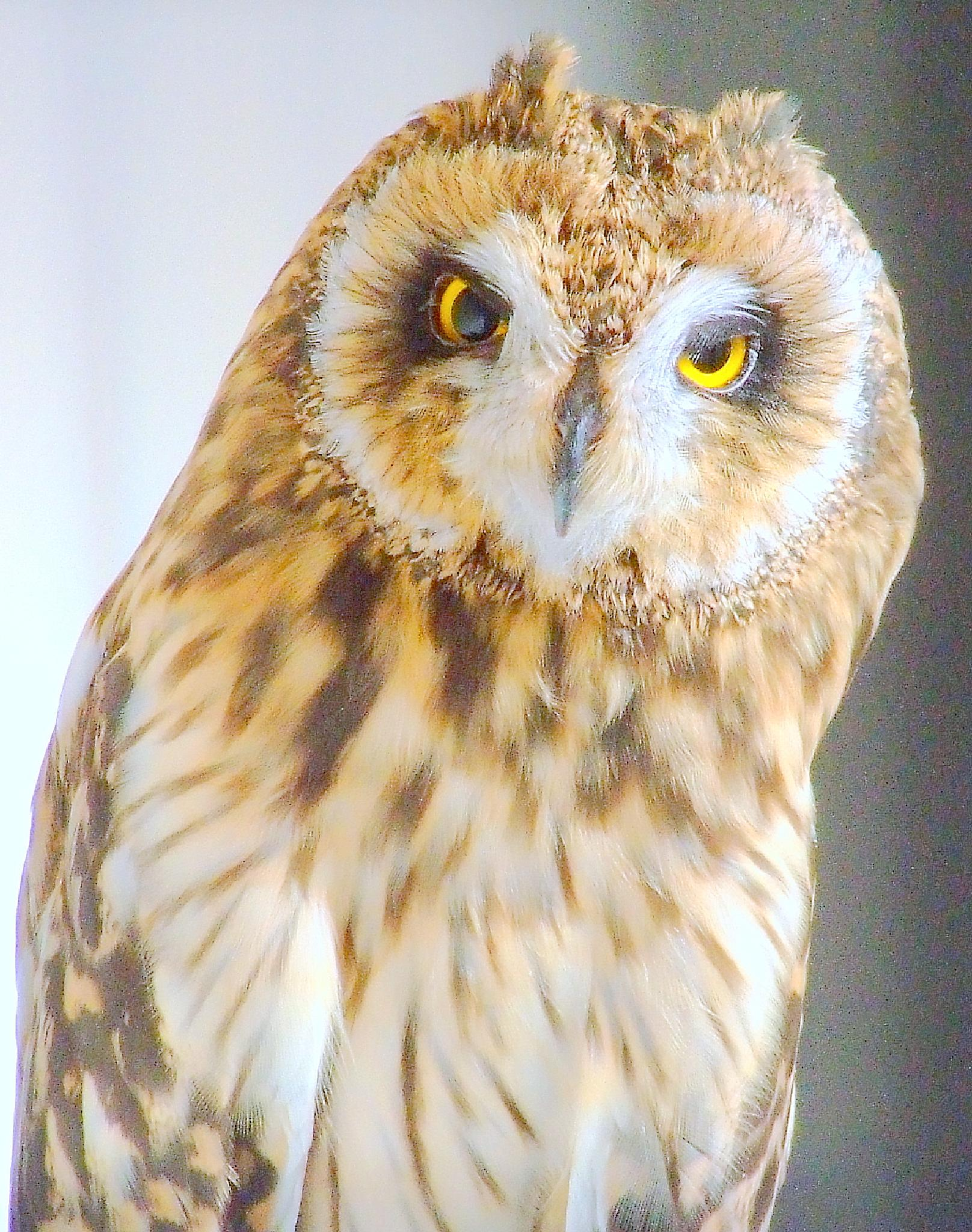 owl by graham.drew.90