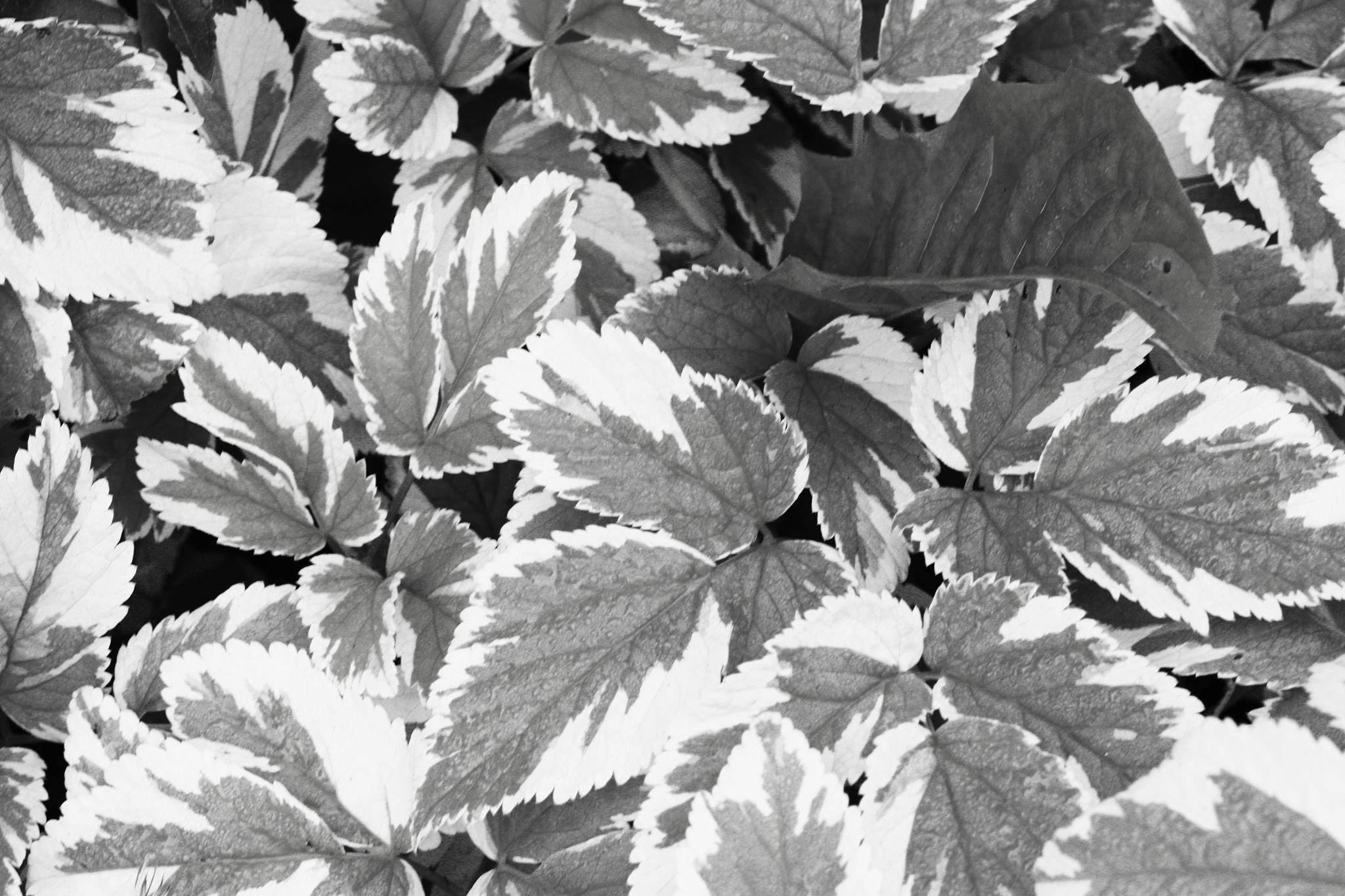 mono leaves by cindy.martin.7503