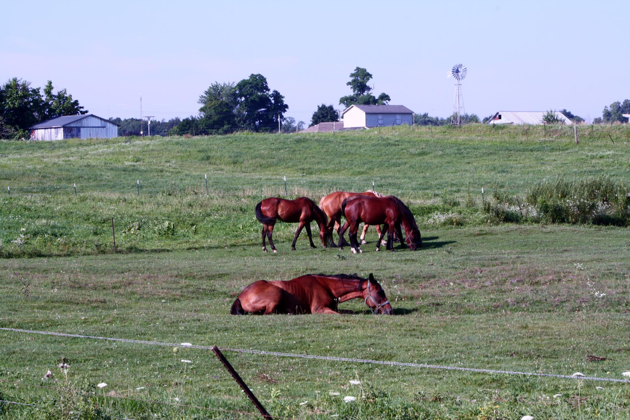 Horses by cindy.martin.7503