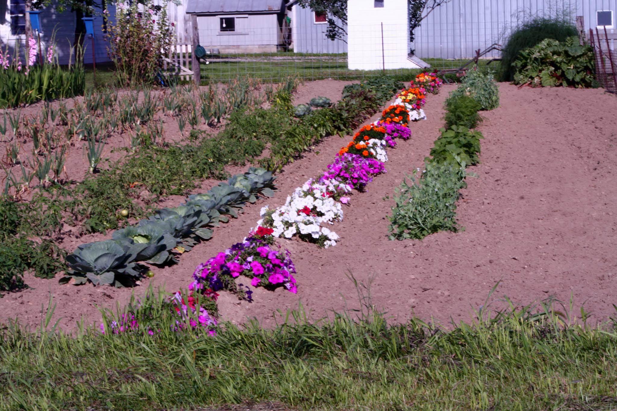 Amish Garden by cindy.martin.7503