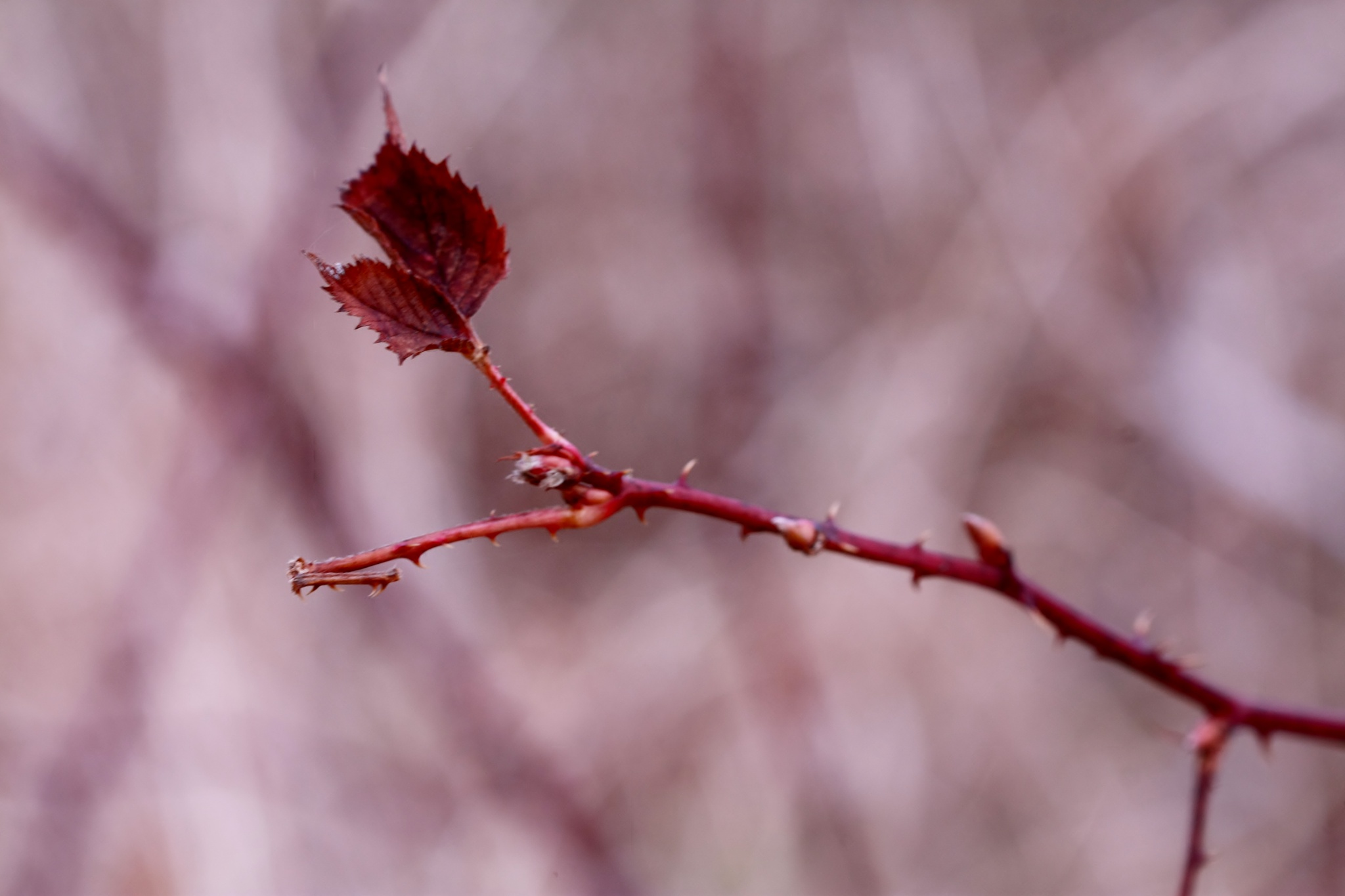 Red Leaves by cindy.martin.7503