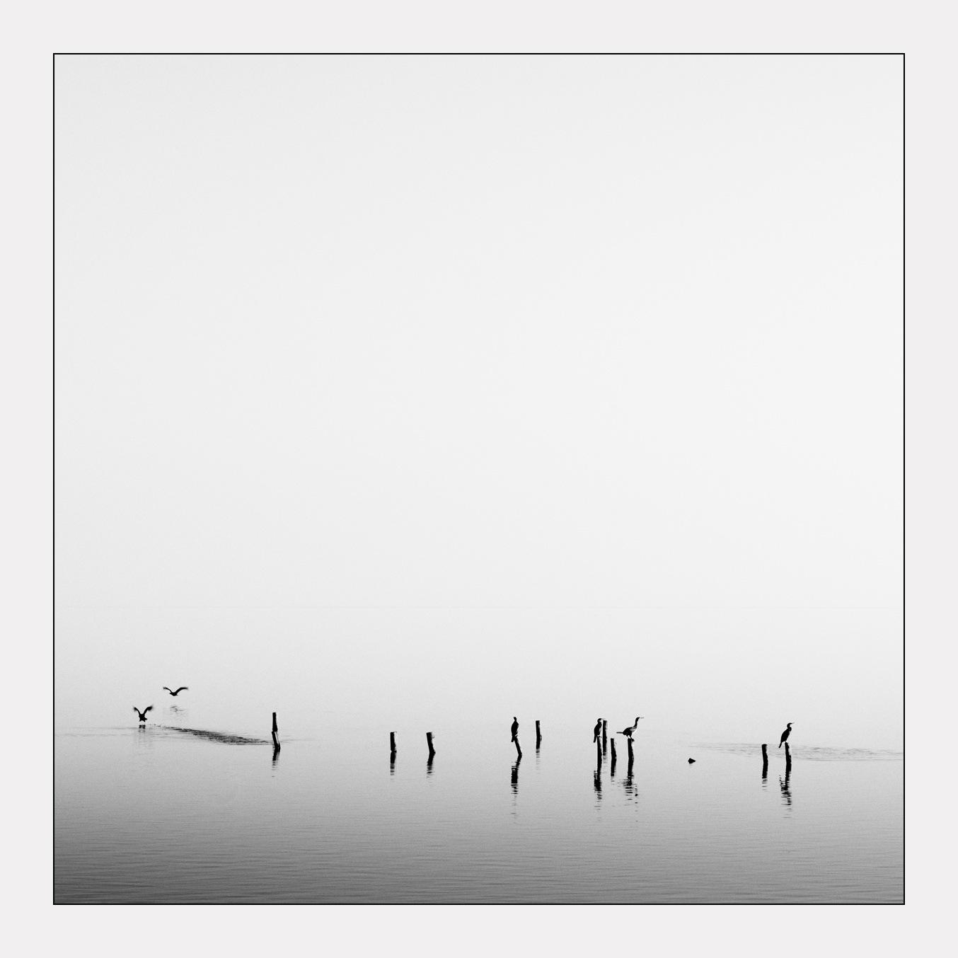 Cormorants at dusk by Nemooo