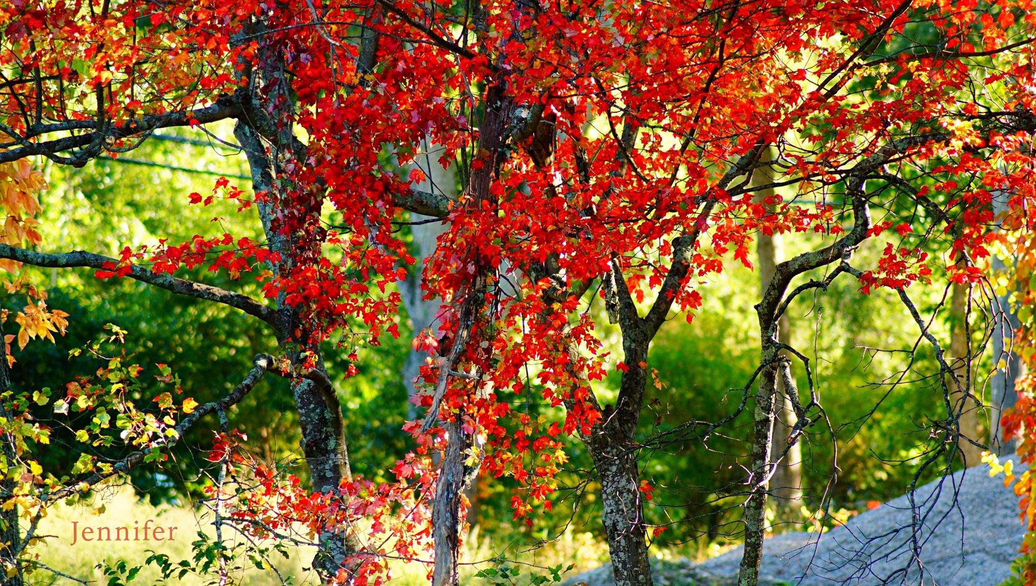 I feel like a vibrant red Autumn by Jennifer