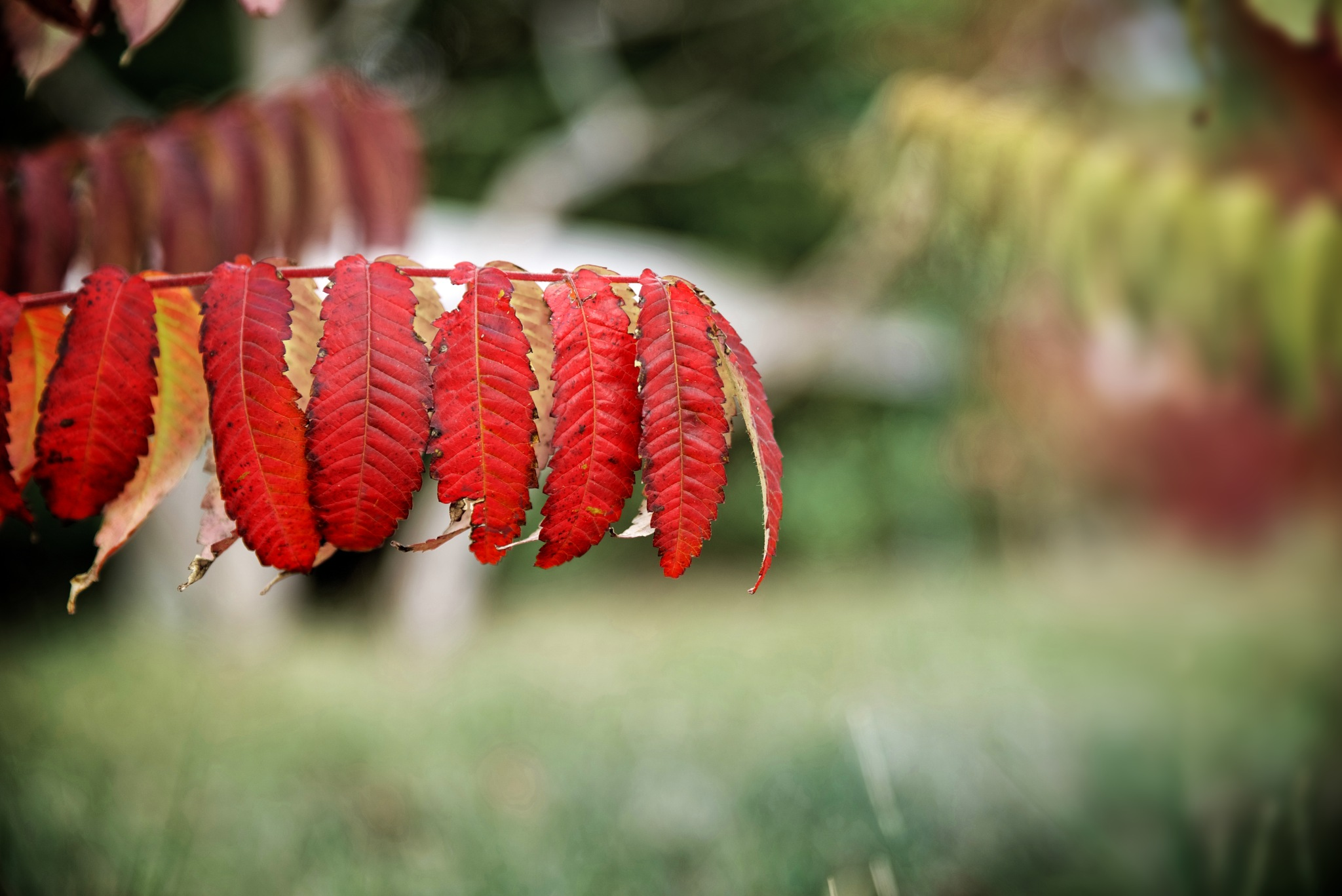 Autumn by RIwanowski