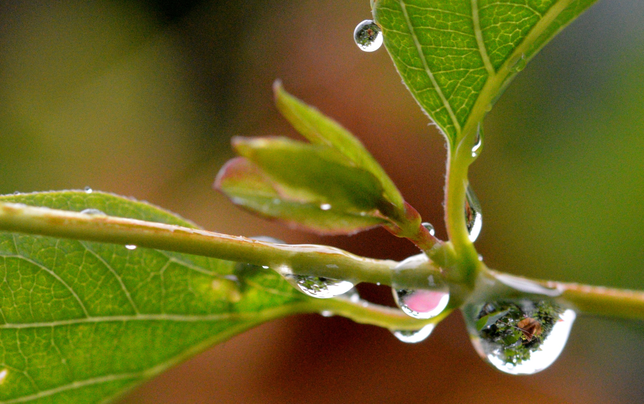 Photo in Macro #rain #garden #water drops #reflection #leaves