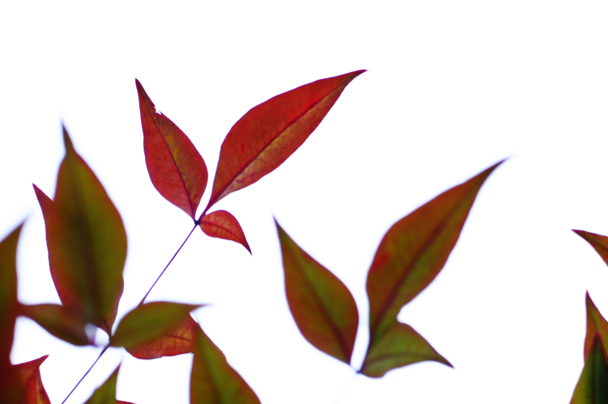RED LEAVES by lorena.rinaudo.9
