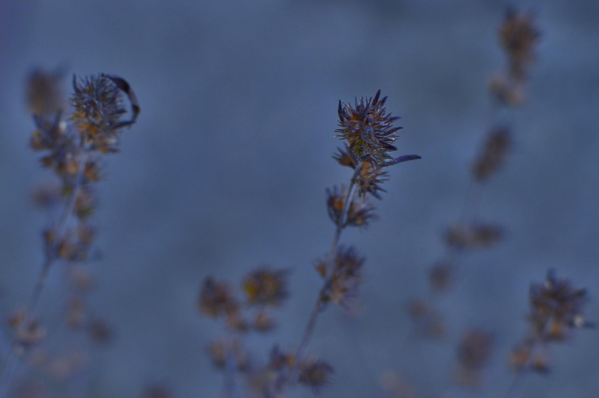 winter by lorena.rinaudo.9