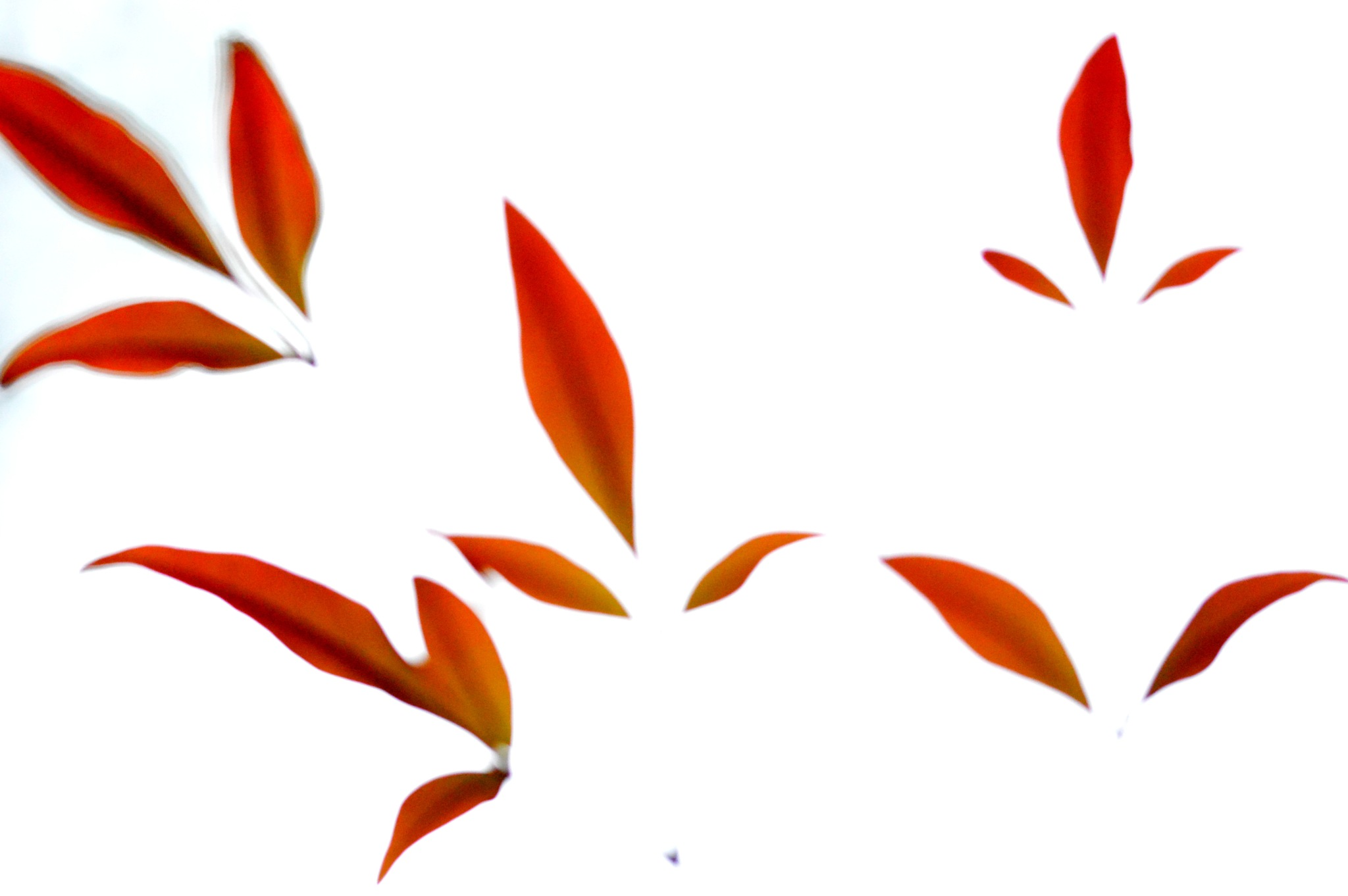leaves in the sky by lorena.rinaudo.9