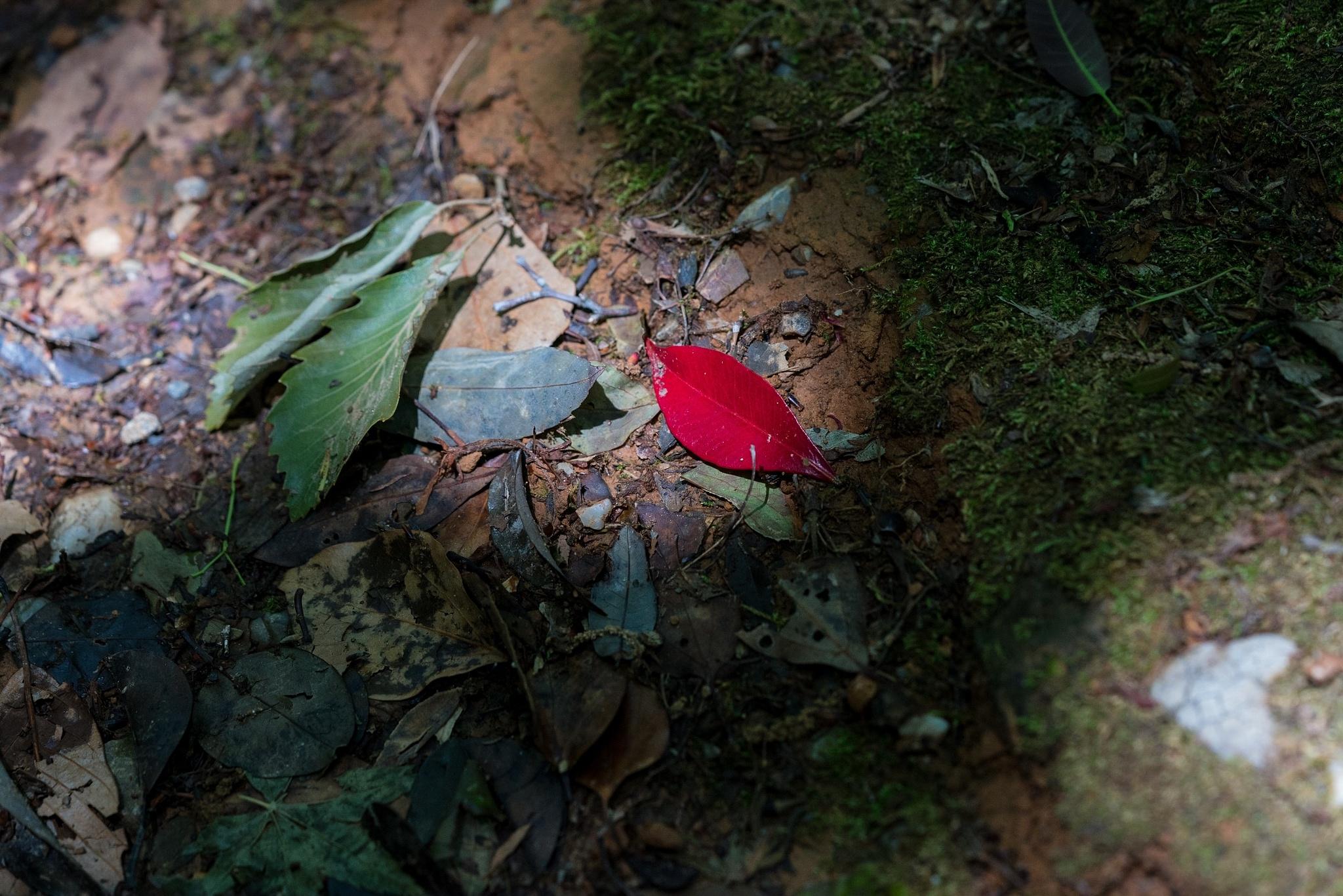 Untitled by Tetsushi Esaki