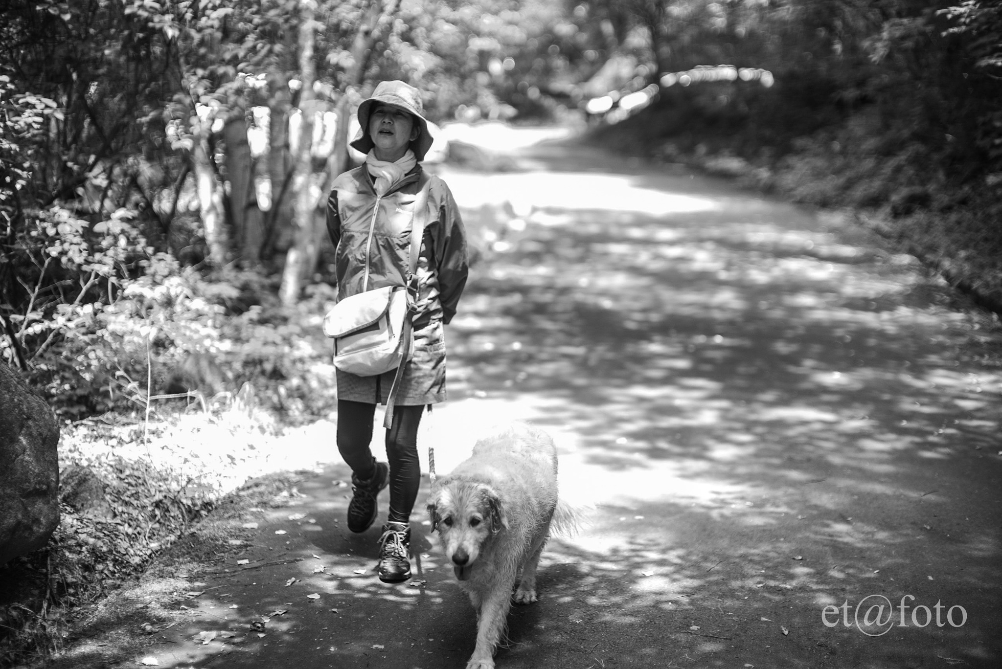 walking with Sunnie the golden retriever by Tetsushi Esaki