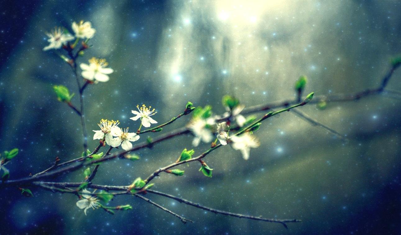 Spring has come .... by Katya Georgieva Photography