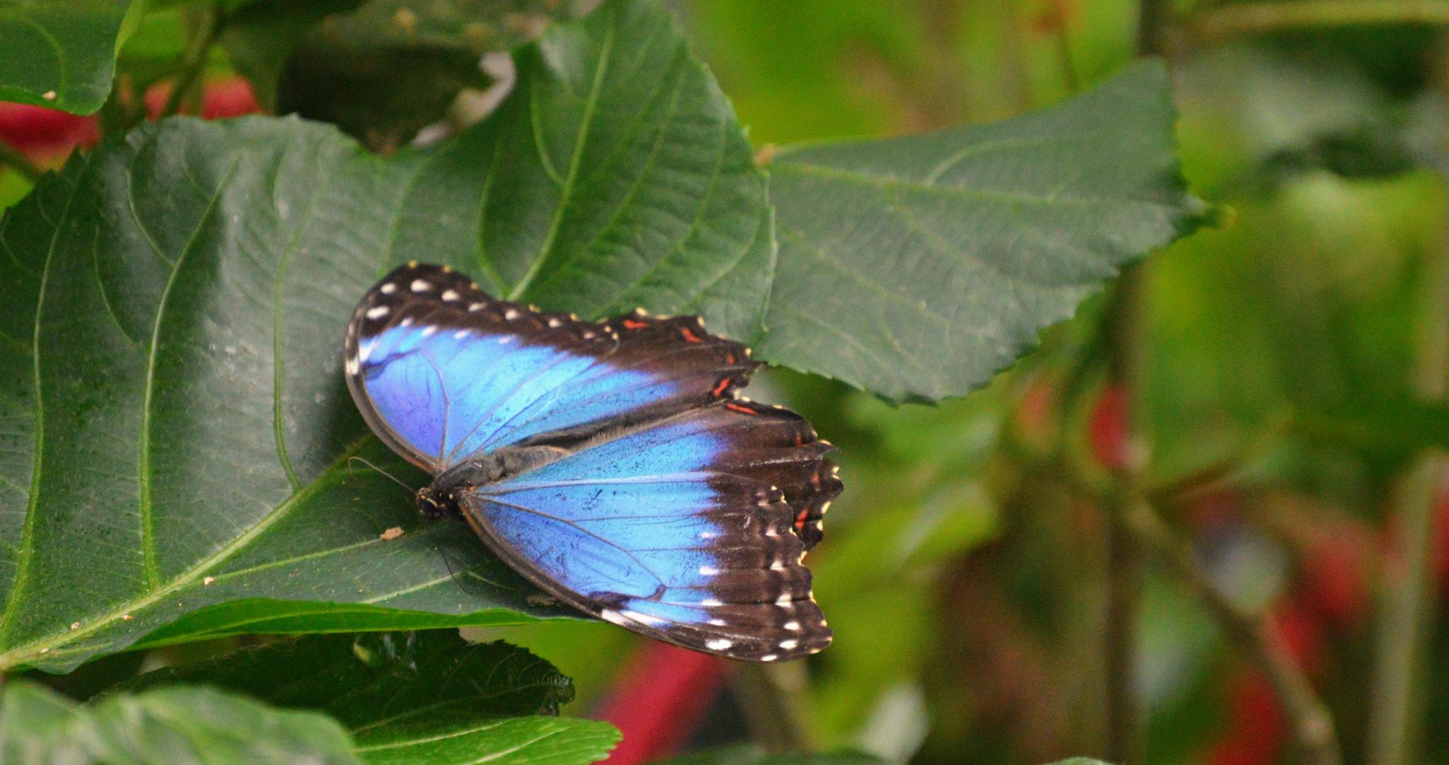 ~~ Dance of butterflies ~~ by Katya Georgieva Photography