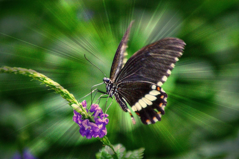 Dance of butterflies by Katya Georgieva Photography