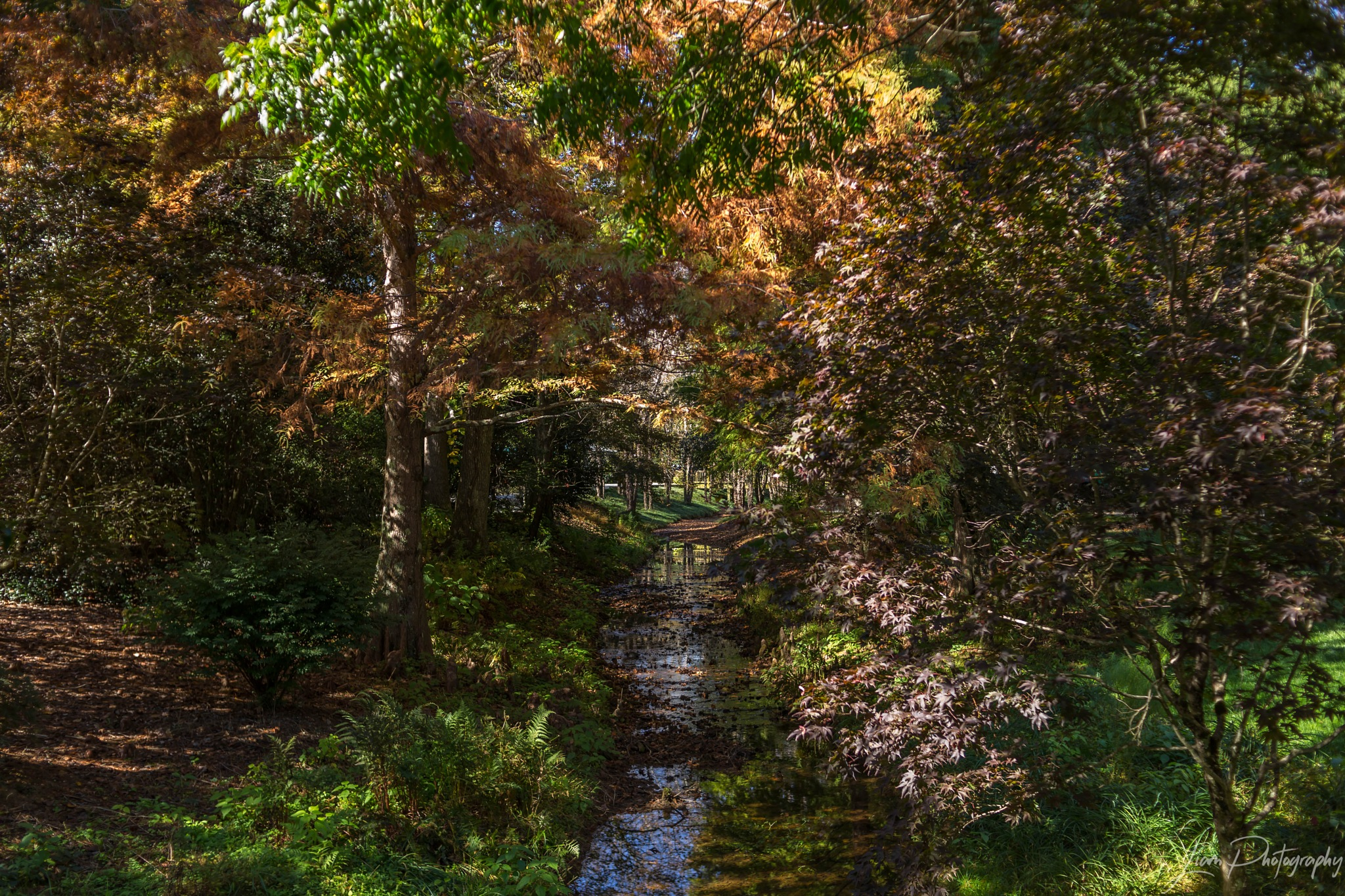Fall Colors & Stream by Liam Photography