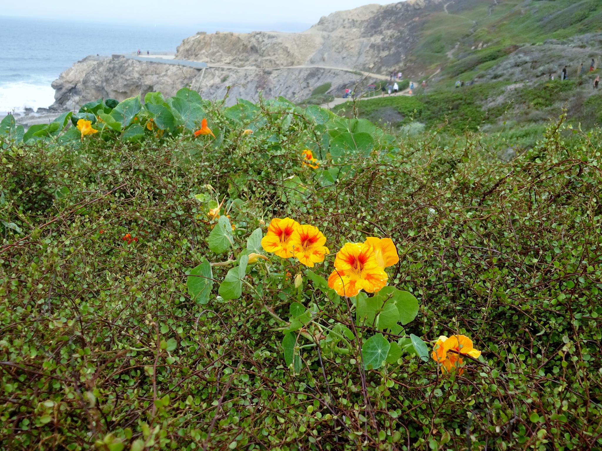 Little flowers at the Pacific Coast by gudrun.jones